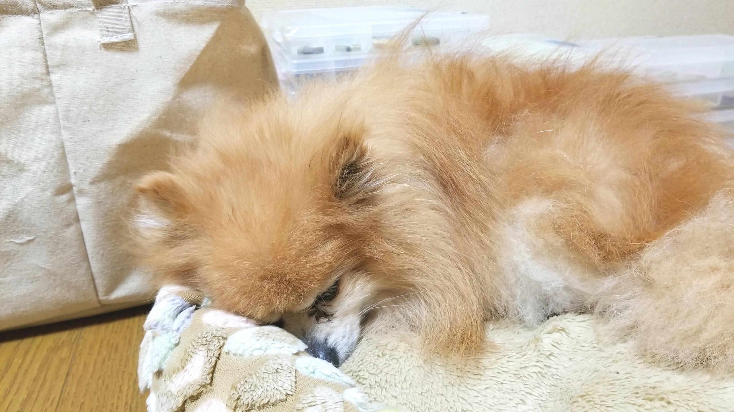 犬ペット餌ご飯食べない心臓病気弁膜症認知症パテラポメラニアン小型