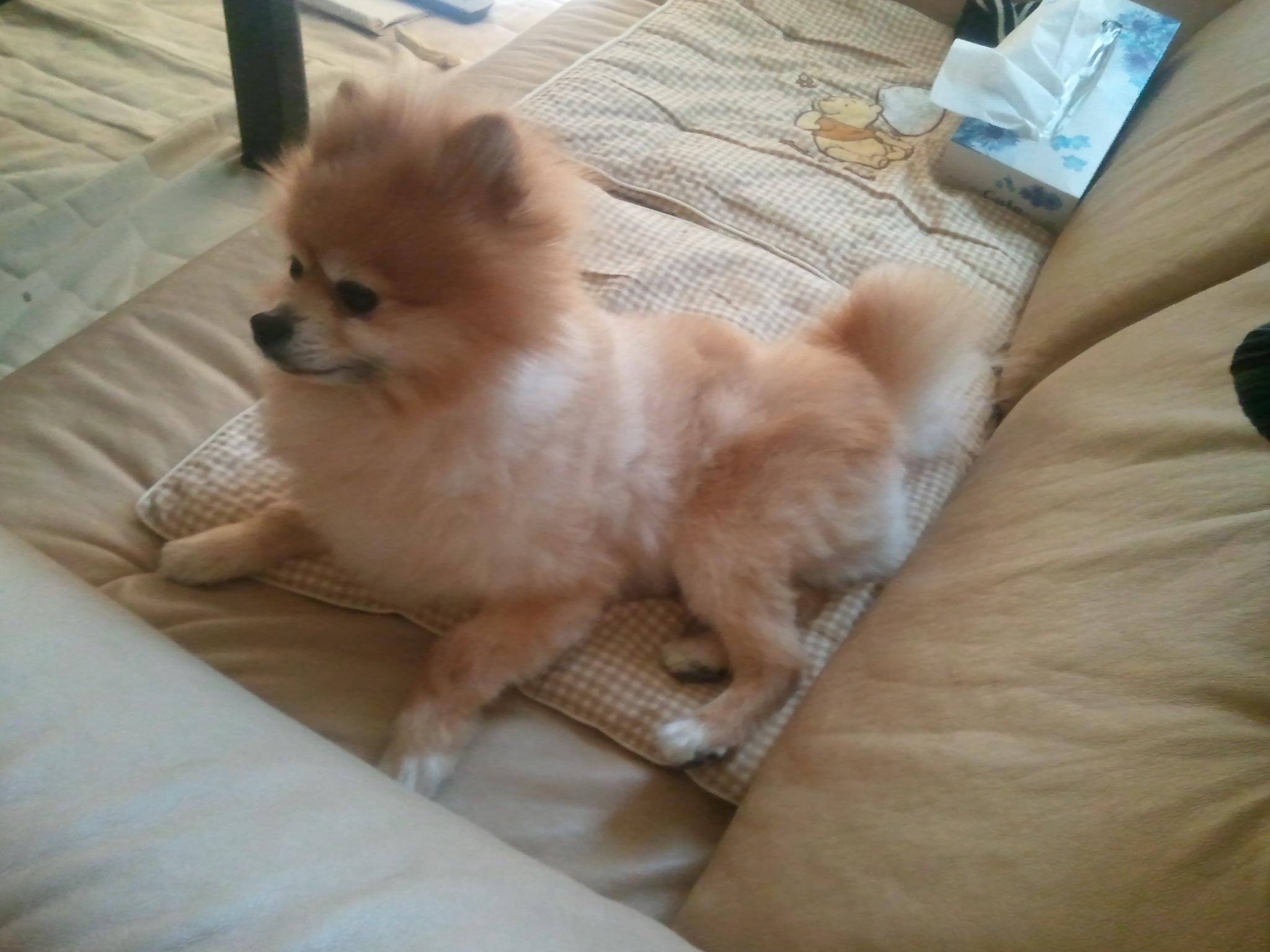 犬の病気,食欲不振,対処,対応,処置,ペット,ポメラニアン,可愛い,好き