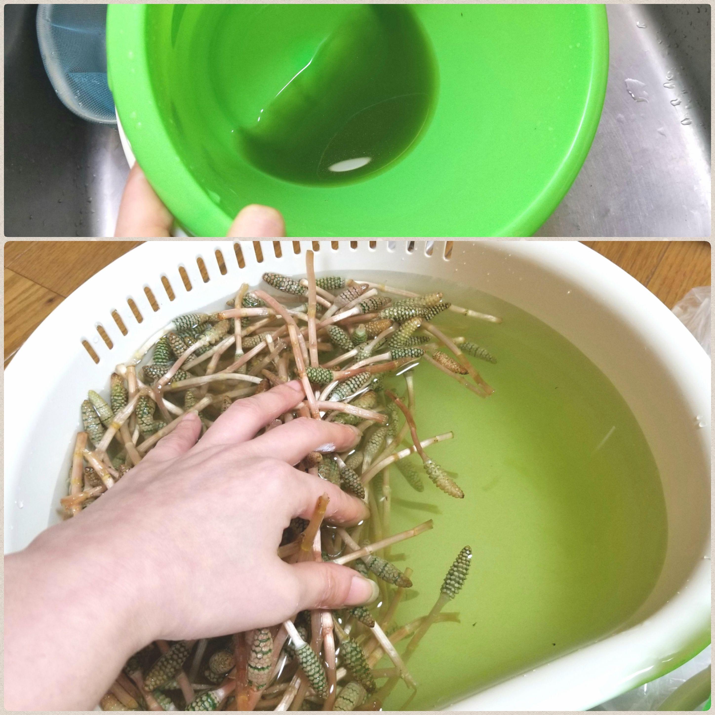 つくしの咲く時期旬,大量はかま剥き部位,下ごしらえ,山菜花粉,食べ頃