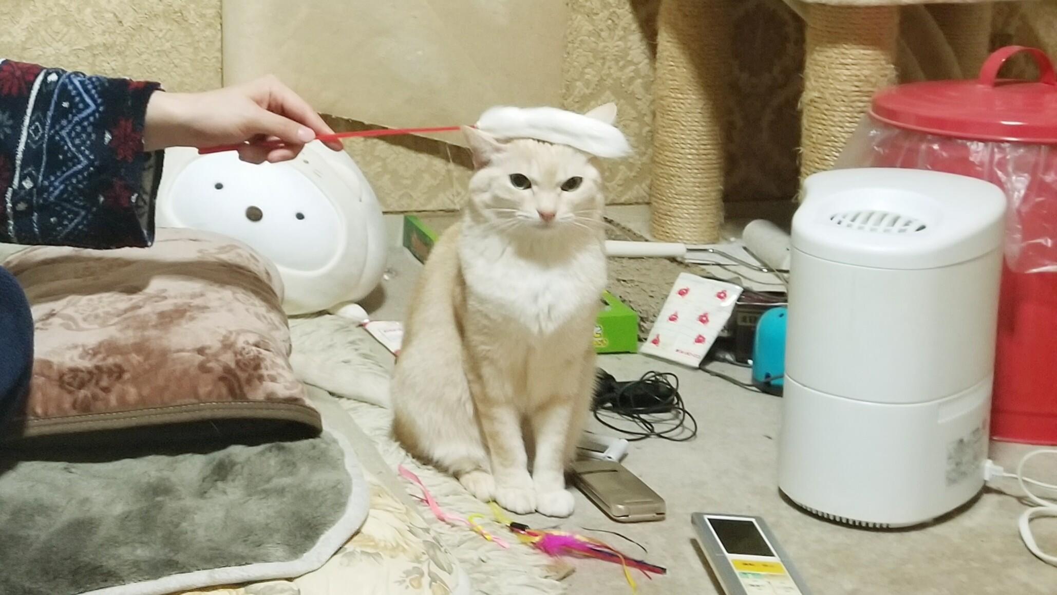 ペットは家族猫好きにゃんこかわいいぬいぐるみみたいな面白い画像