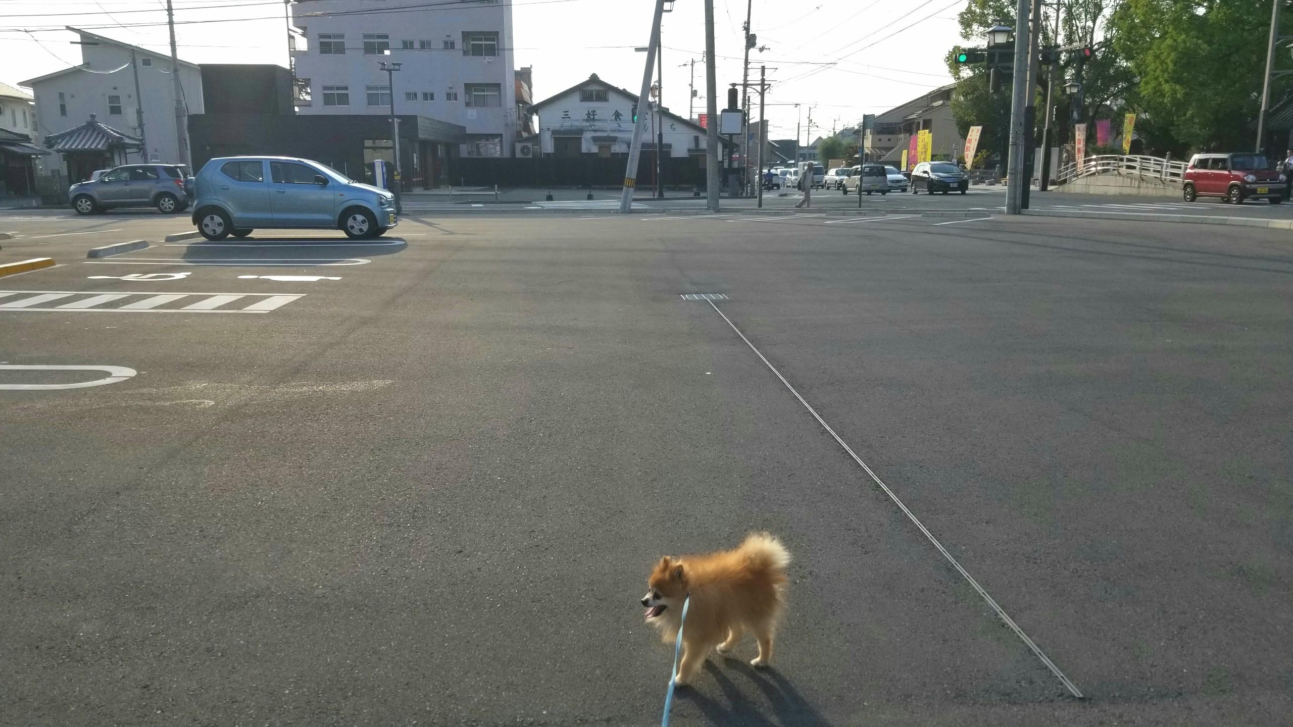 うちの子可愛い,愛犬との生活,お散歩はクタクタ,元気でいて欲しい