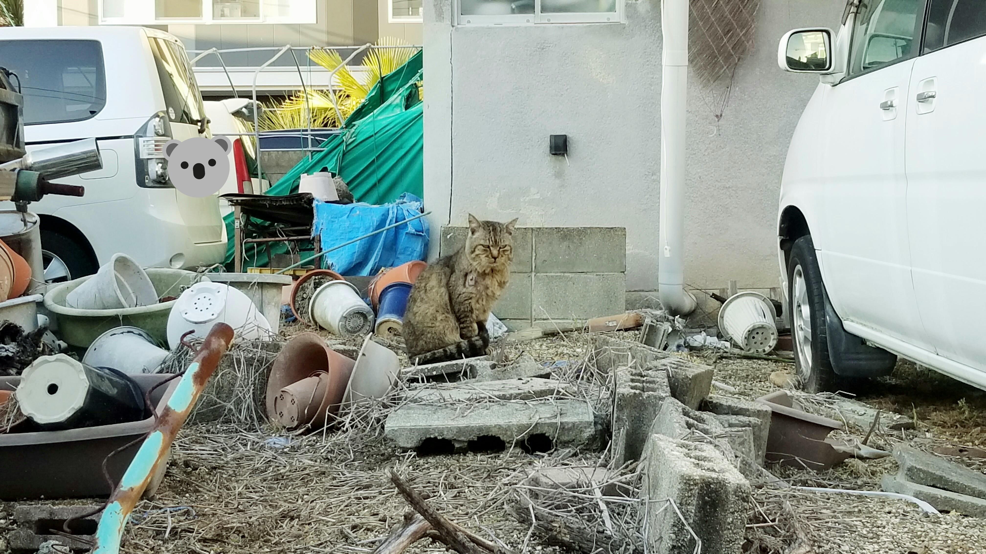 野良猫にゃんこパトロール探検近所中庭空き地行方不明迷子心配