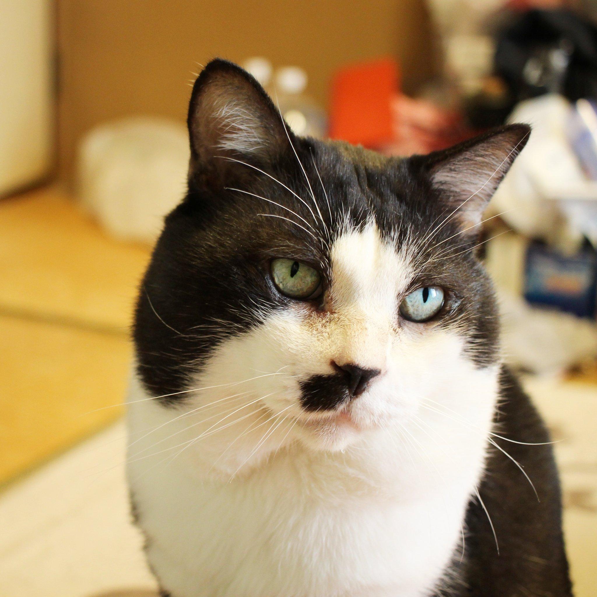 可愛い猫,ねこちゃん,ぬこ,綺麗な毛並み,凛々しいポーズで記念写真
