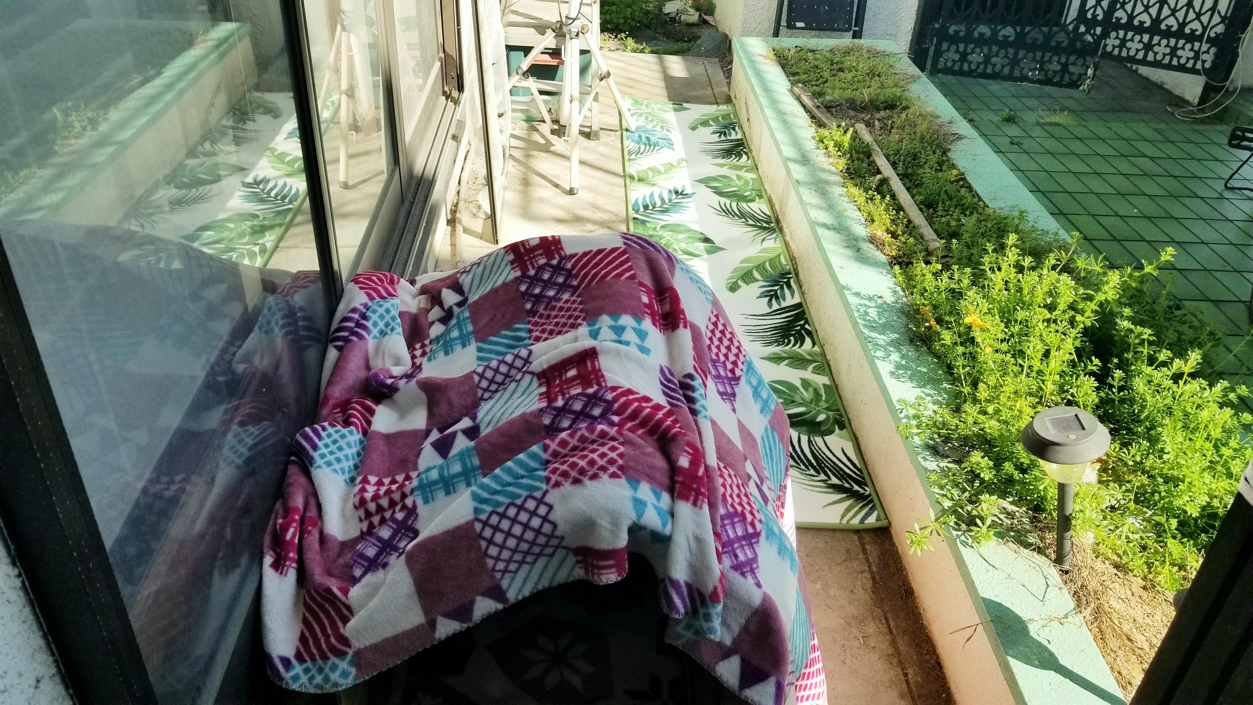 野良猫保護段ボール小屋の模様替え家ハウス部屋温かく可愛い写真