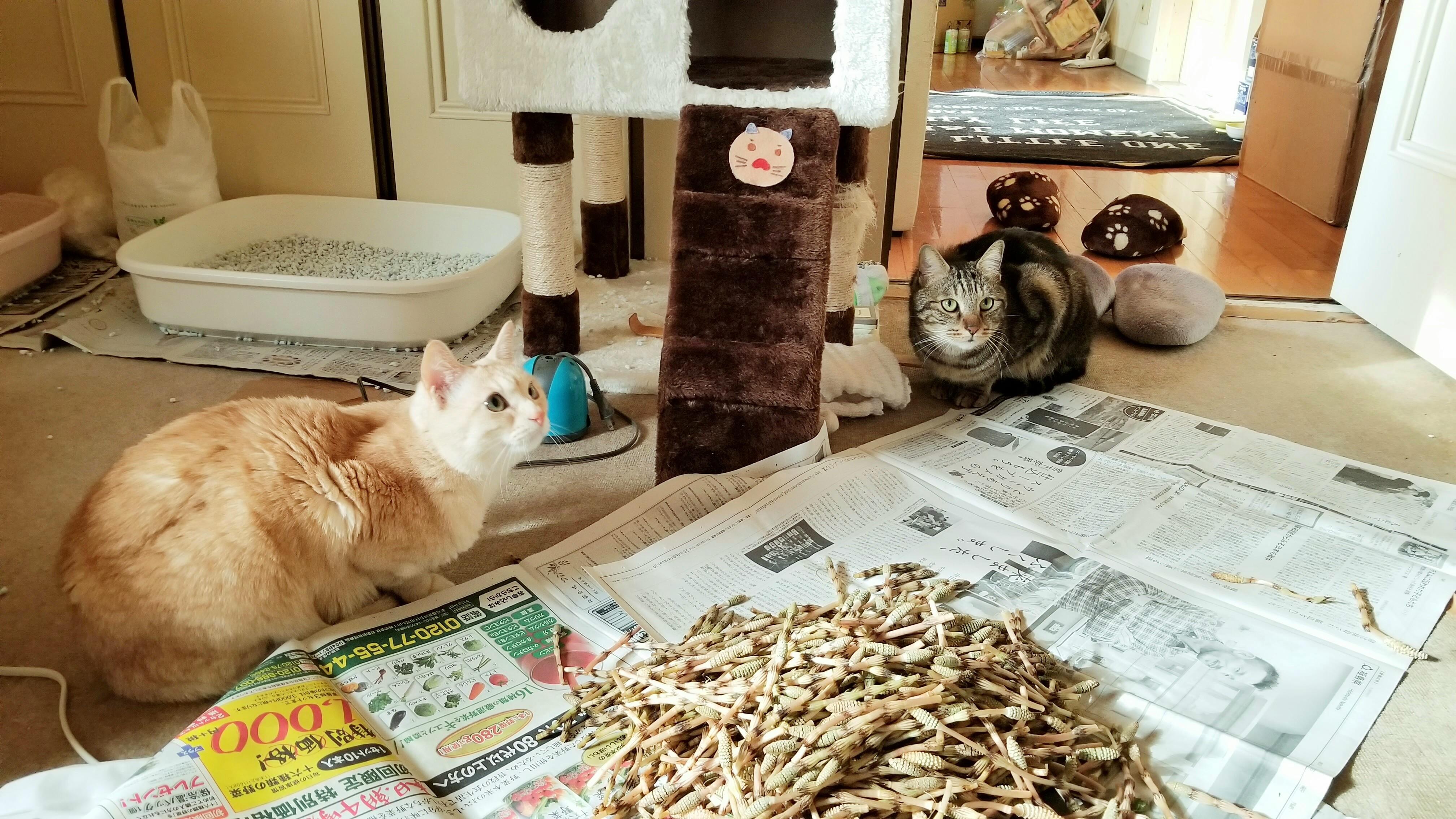 かわいい猫大好きにゃんこラブ白黒色興味津々ペットは家族写真画像