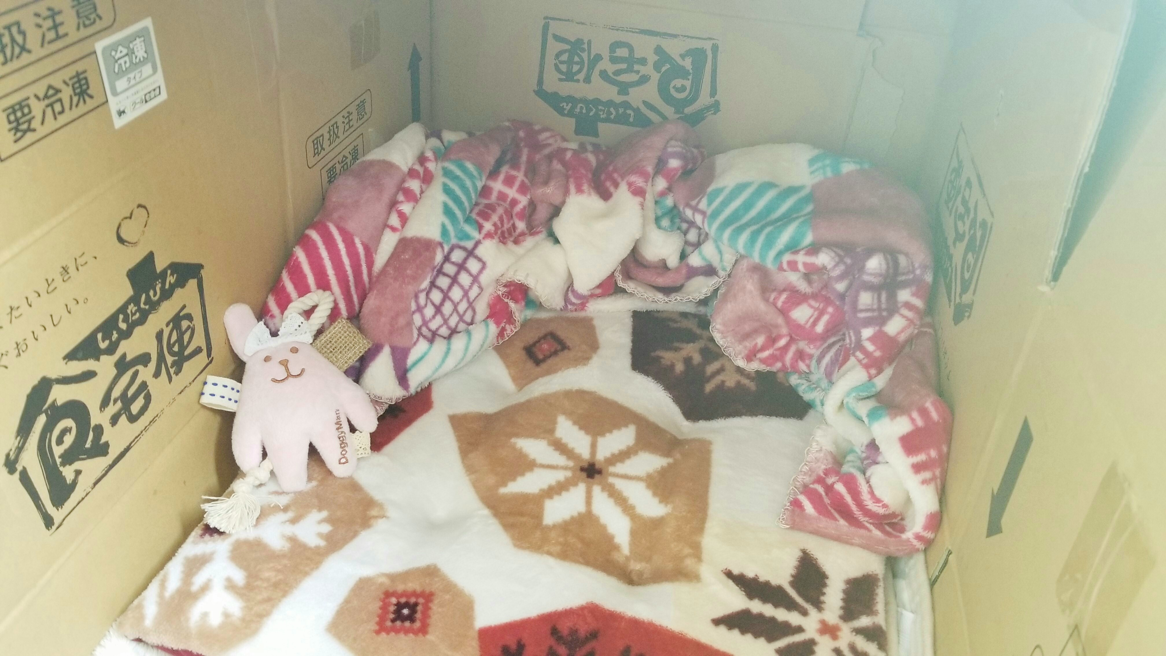 野良猫保護簡易小屋の模様替え家ハウス温かくお洒落にな可愛い画像
