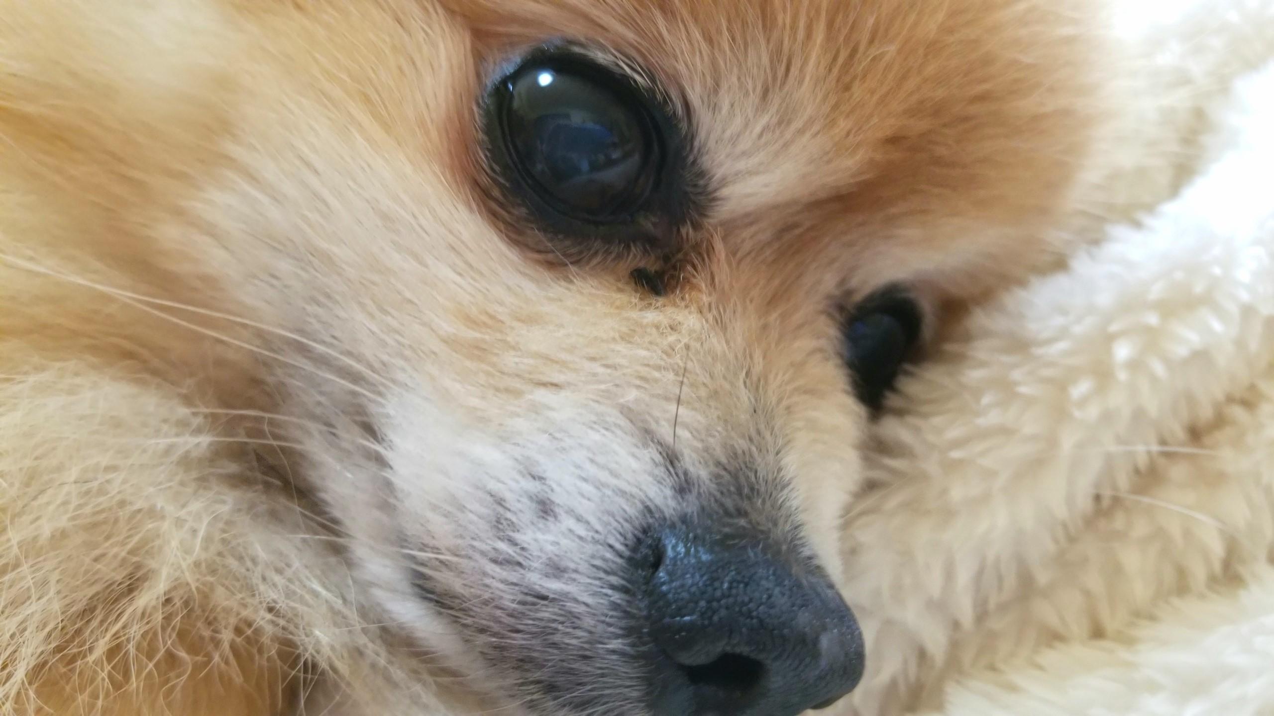 愛犬君の食事管理,肛門嚢炎,犬の病気,老犬ペットの様子,変化