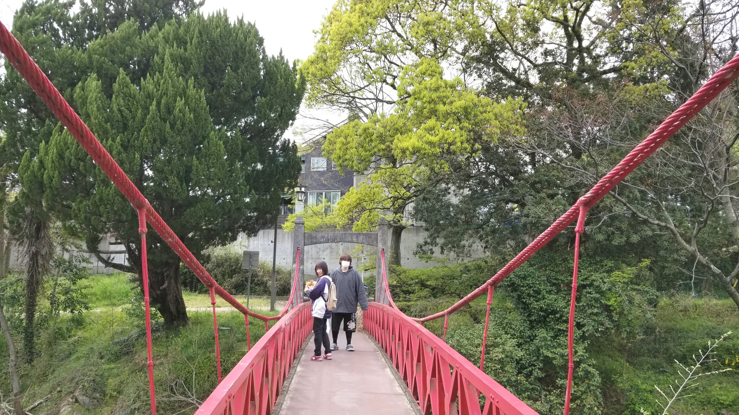 お花見どころ,おすすめスポット,ペット散歩桜並木おばいとこブログ