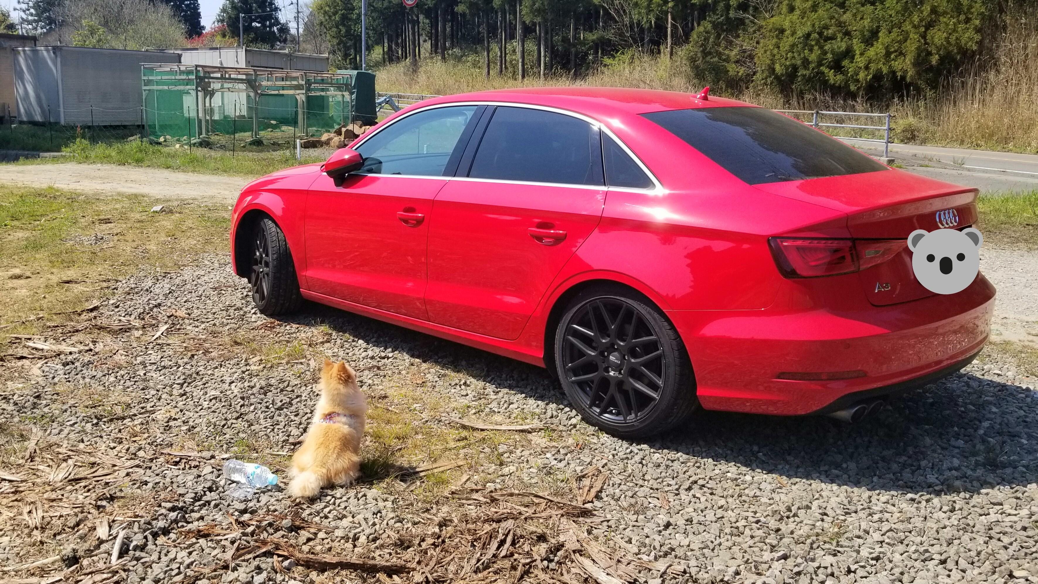 愛車小型犬大好きBMW赤いぬいぐるみ人気画像写真好きかっこいい