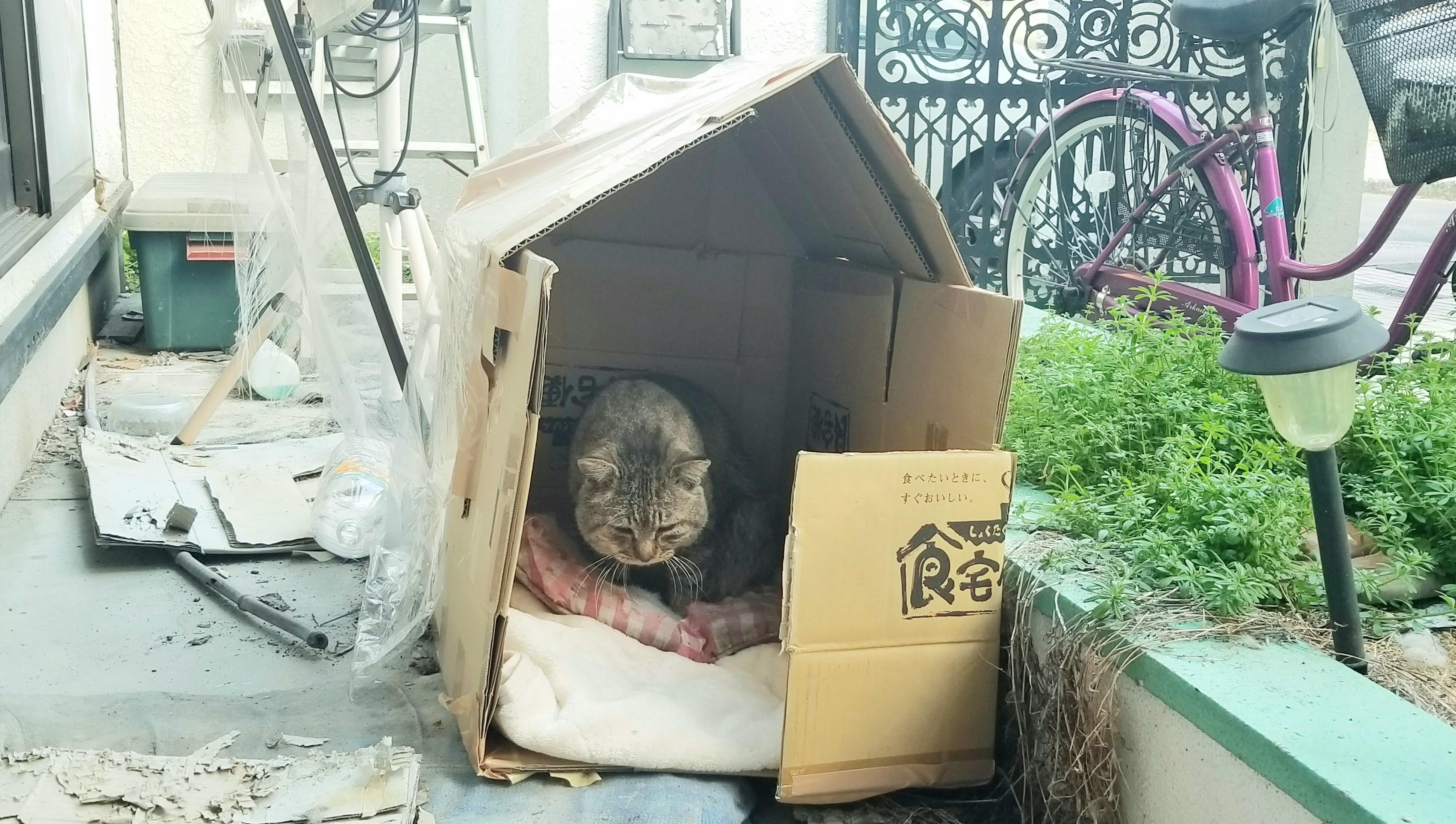 野良猫黒色段ボール小屋保護老衰怪我ボロボロ病気心配どら元気がない