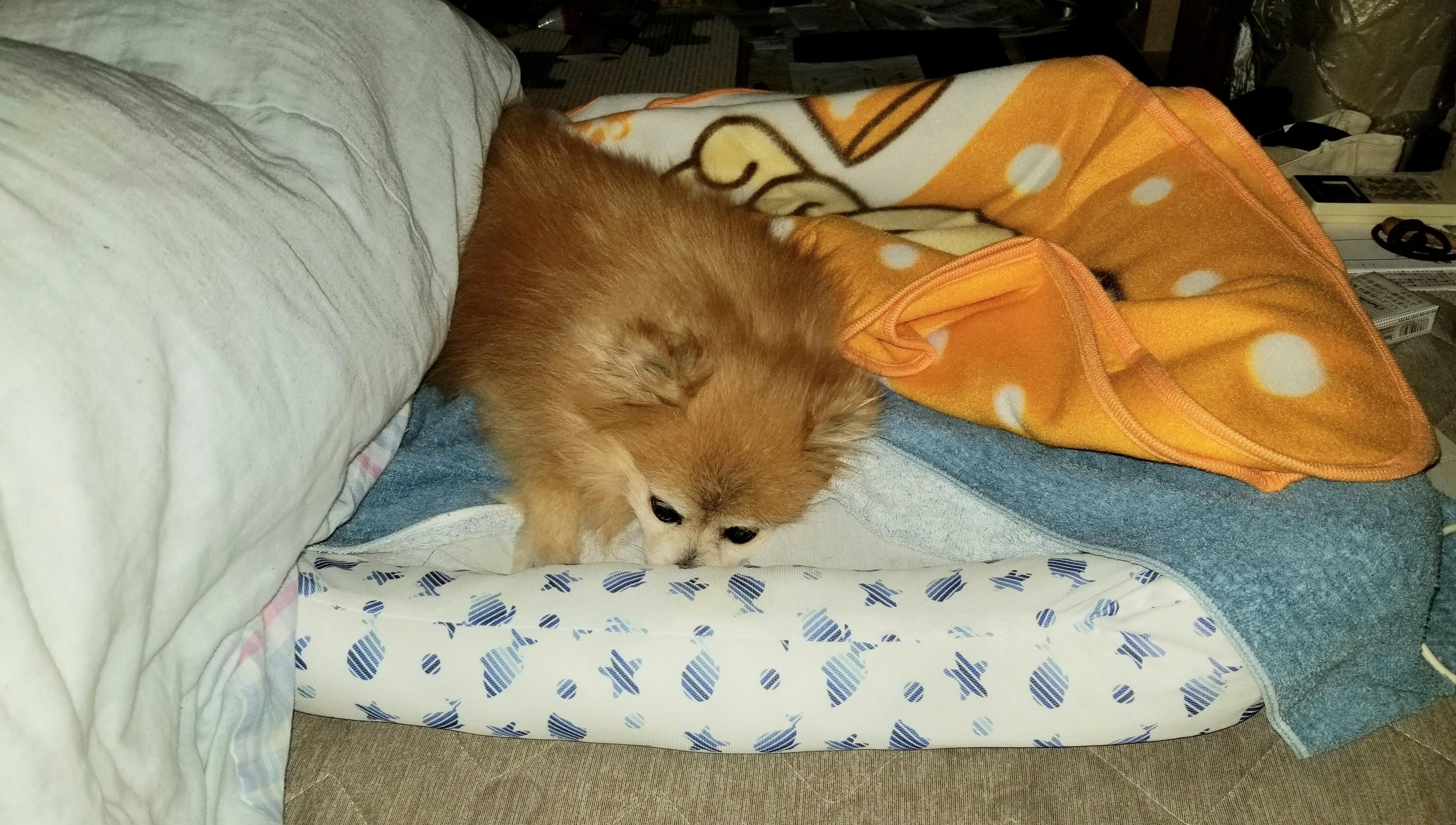 衰弱った老犬ペットの病気介護長生きしてねずっと一緒立てない