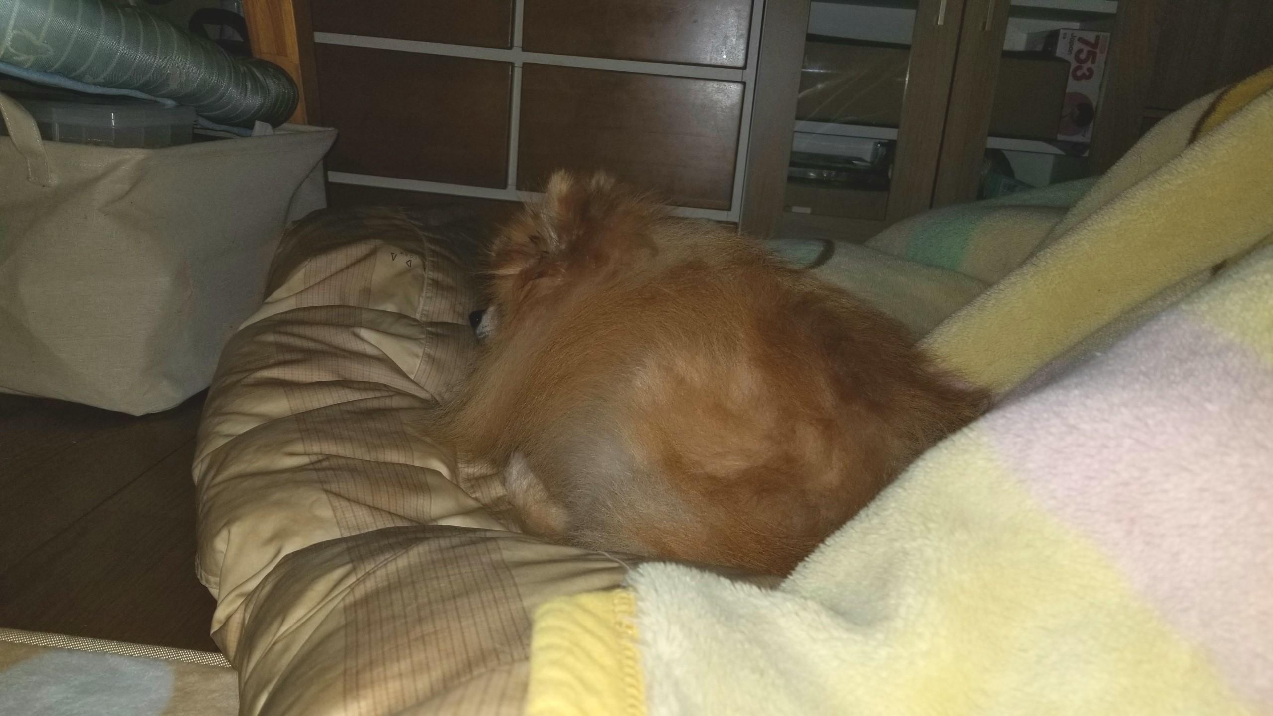 愛犬ペットの病気,膝の痛みパテラ,膀胱炎食欲不振ご飯を食べない