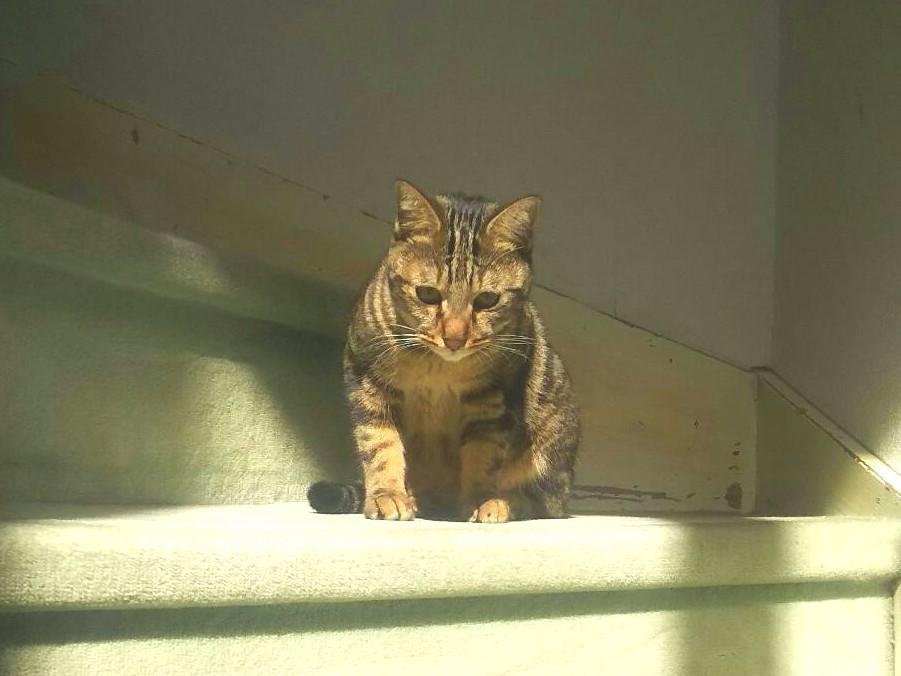 野良猫拾った,かわいいネコ,ペットは家族,初めての体験,賢い