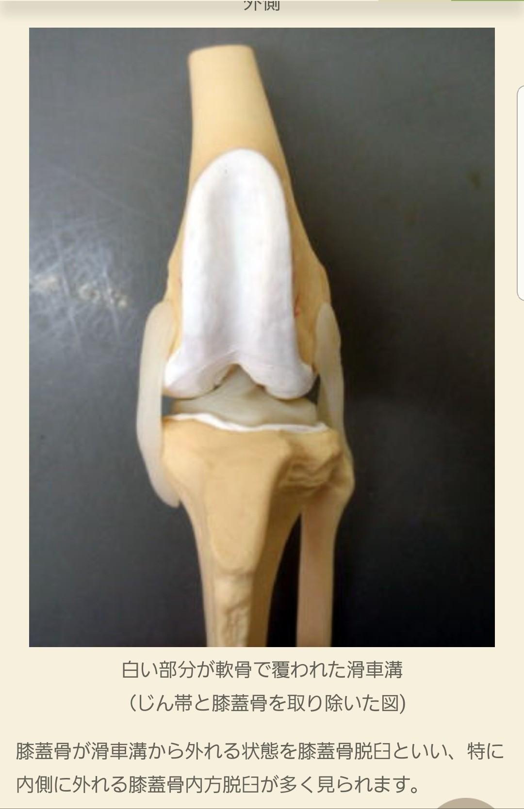 膝蓋骨脱臼,パテラ,愛犬,犬の病気,関節の痛み,老犬,ペット,小型犬