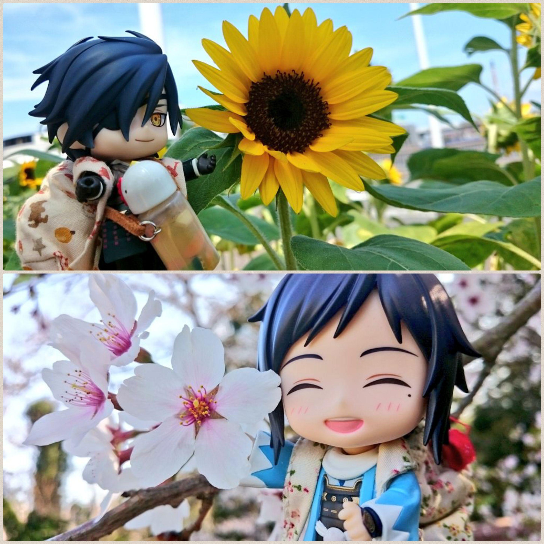 ねんどろいど刀剣乱舞,男士,大和守安定,燭台切,桜満開,夏のひまわり