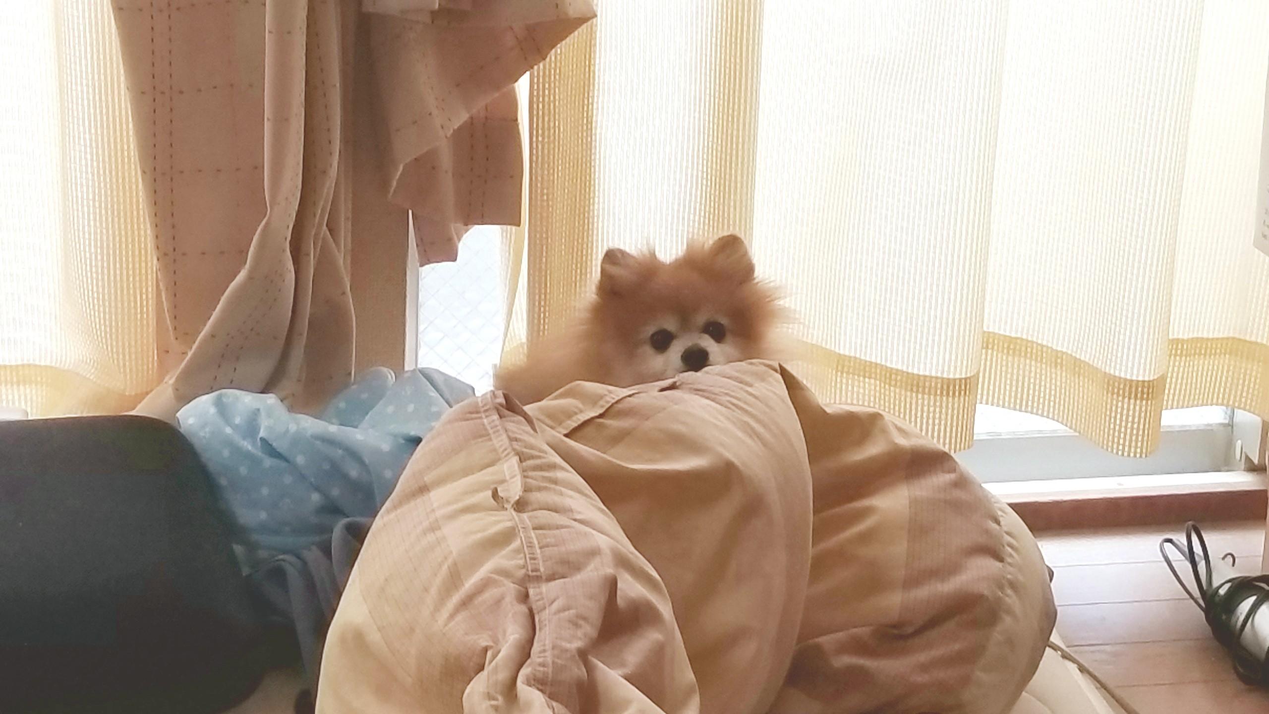 愛犬,ペット,犬,ポメラニアン,大好き,ラブラブ,心配,食欲がない,不振