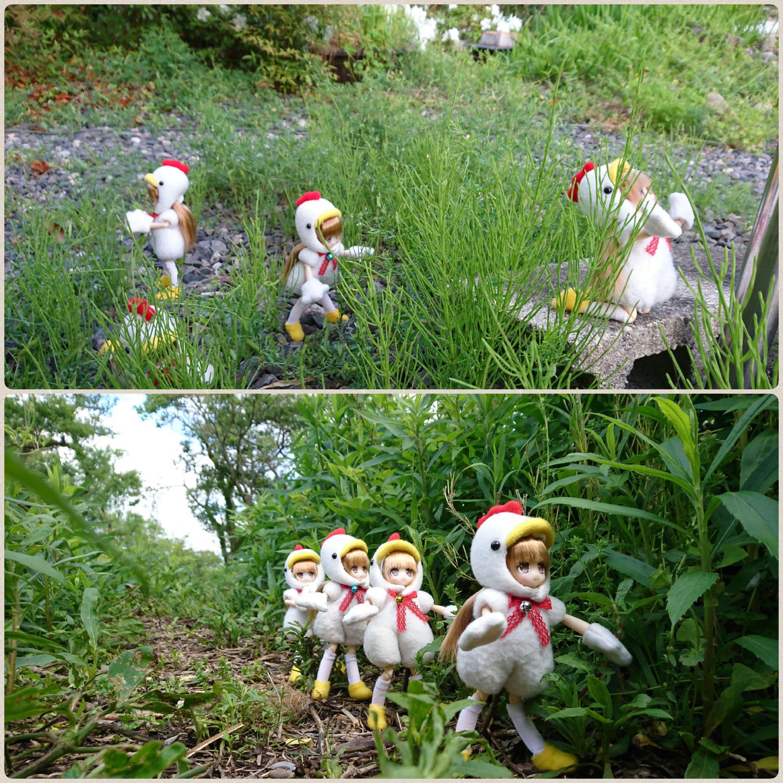 アゾンのネイリー,鶏たちの大自然探検Lilfaryドール,トリトリ冒険隊