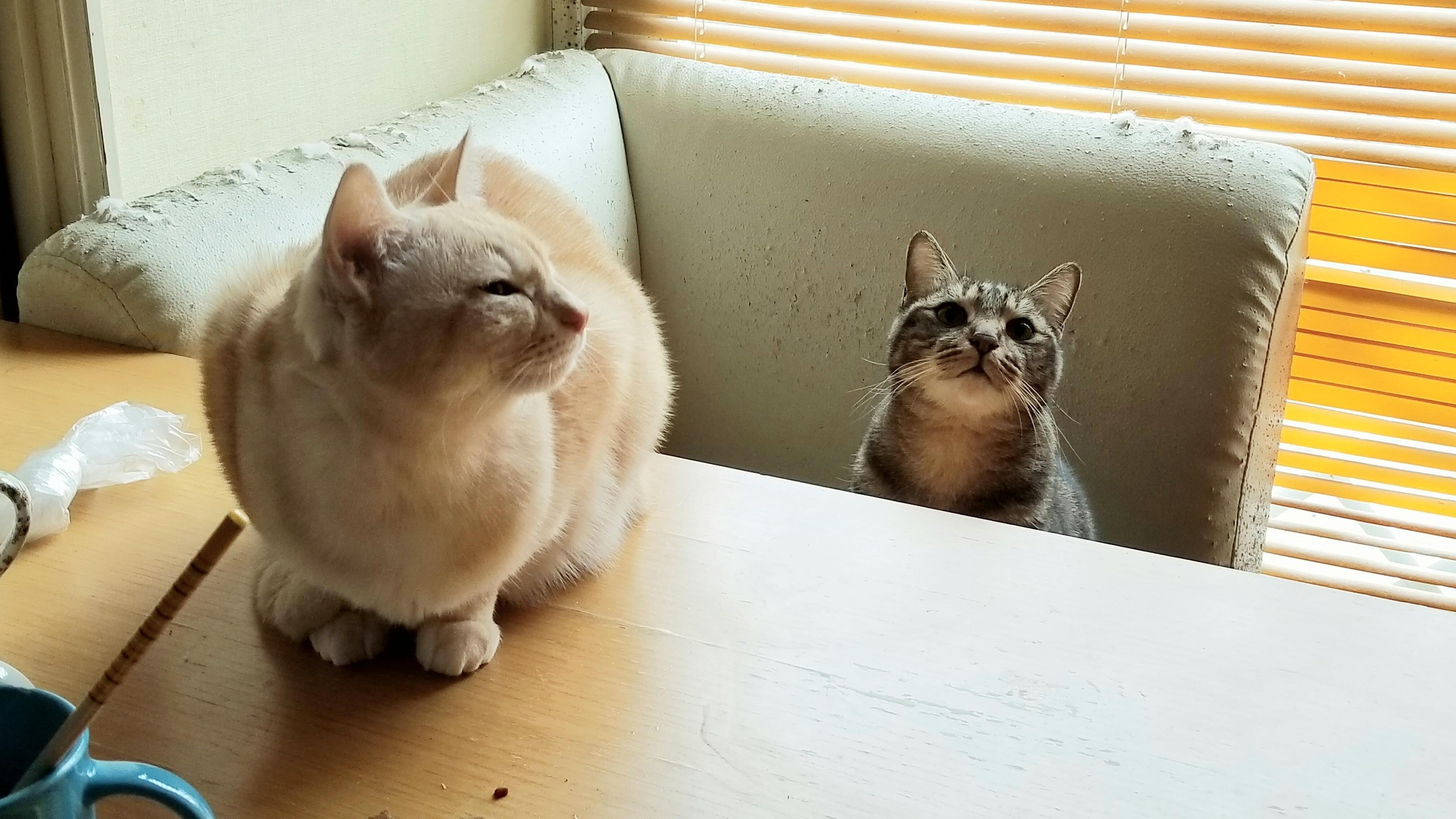 一番かわいいにゃんこラブ獲物を狙う目つき保護猫派飼った面白い