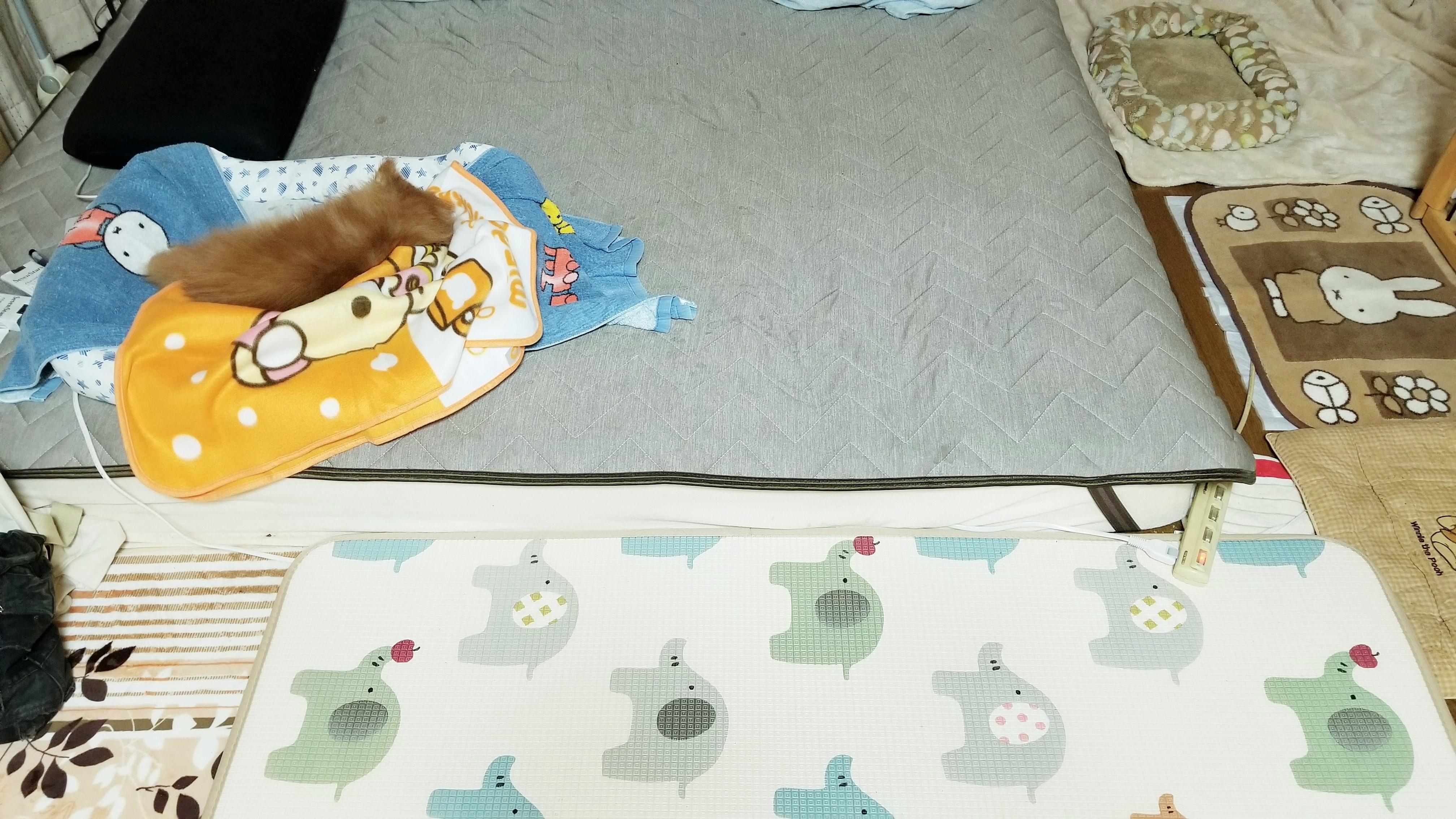 老犬ペットのいる日常生活敷き布団マットレス歩きやすい対処方法