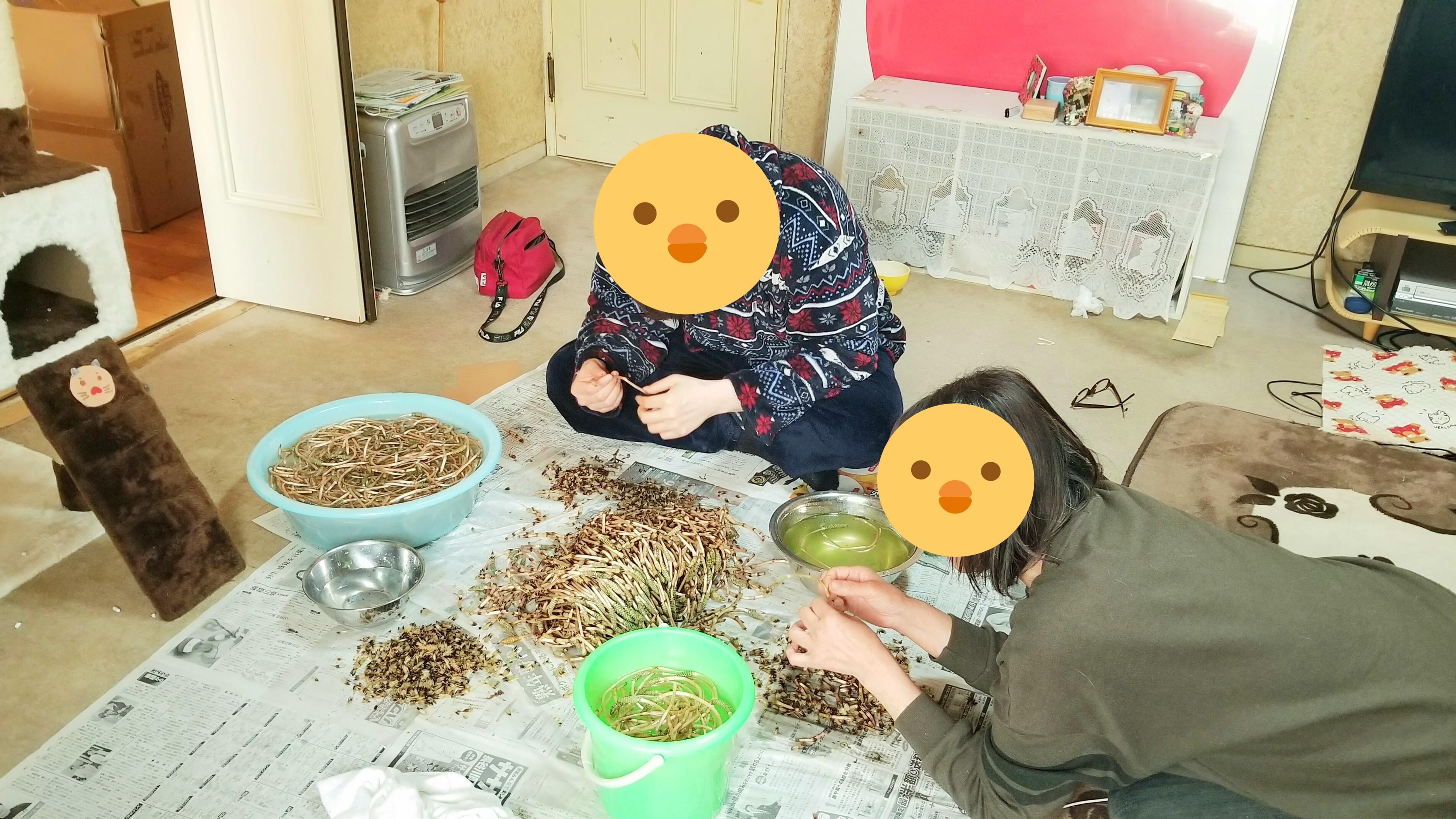 つくし採り楽しい1日かった嬉しい時間親戚と山菜時期旬袴剥き