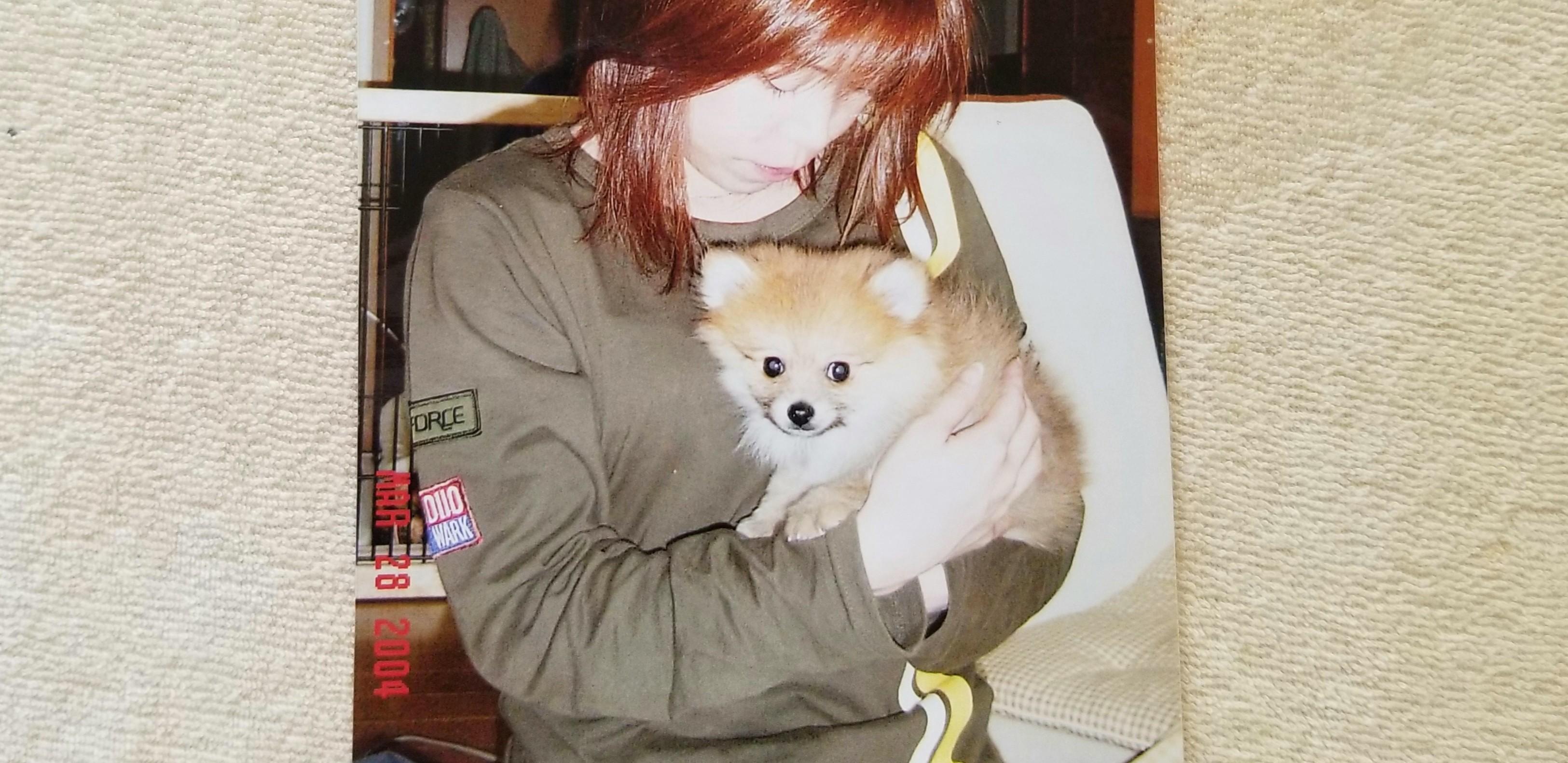 犬ペット懐かしい写真メモリアルグッズフォト赤ちゃんの頃子供思い出