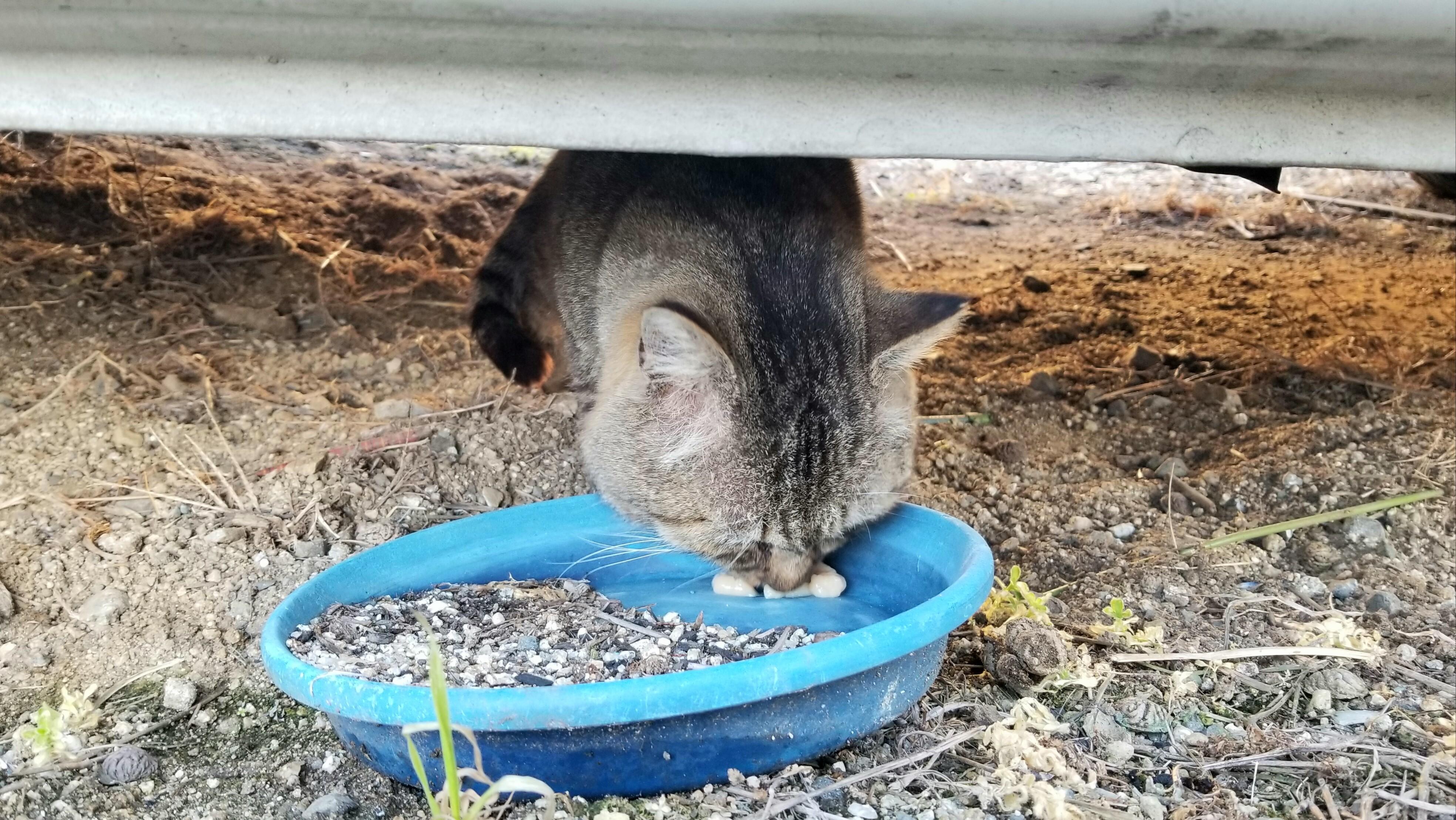 保護猫にゃんこかわいいなつく慣れるまで一人暮らし逃げた偽善
