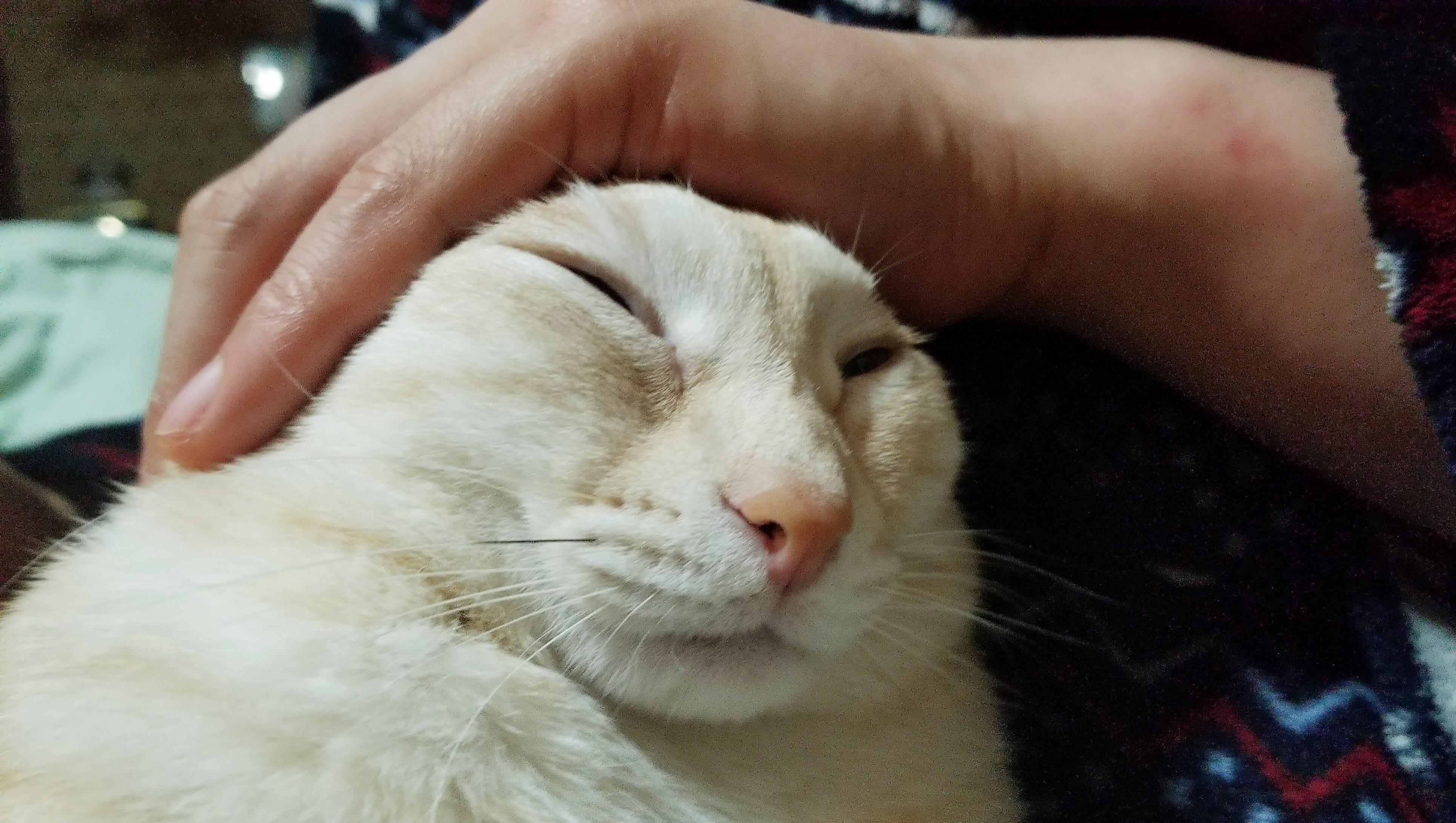 ペットマイファミリー猫大好きにゃんこかわいい変顔おもしろい画像