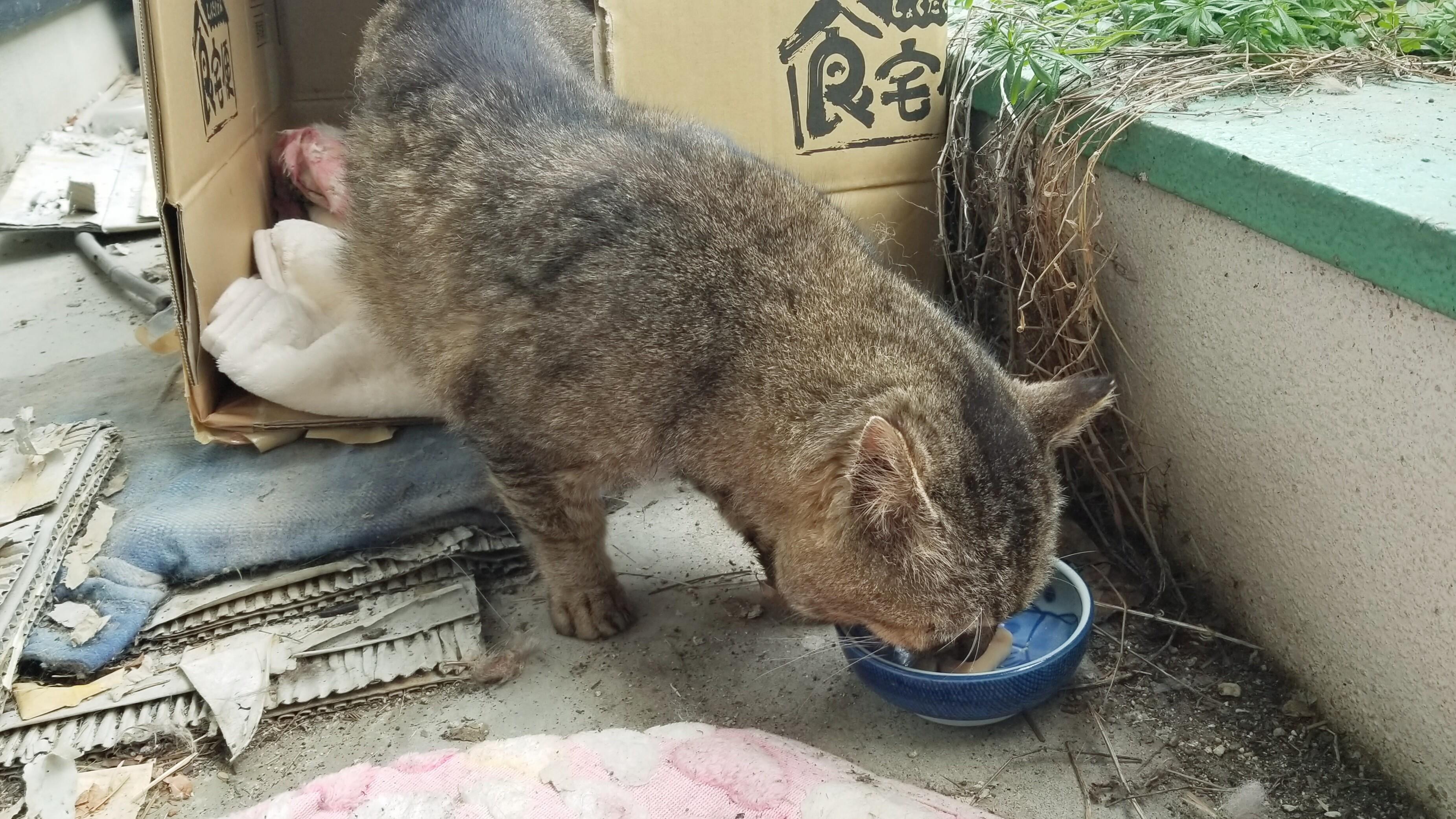 野良猫保護餌やりご飯老衰具合い悪いそう老猫画像にゃんこラブ