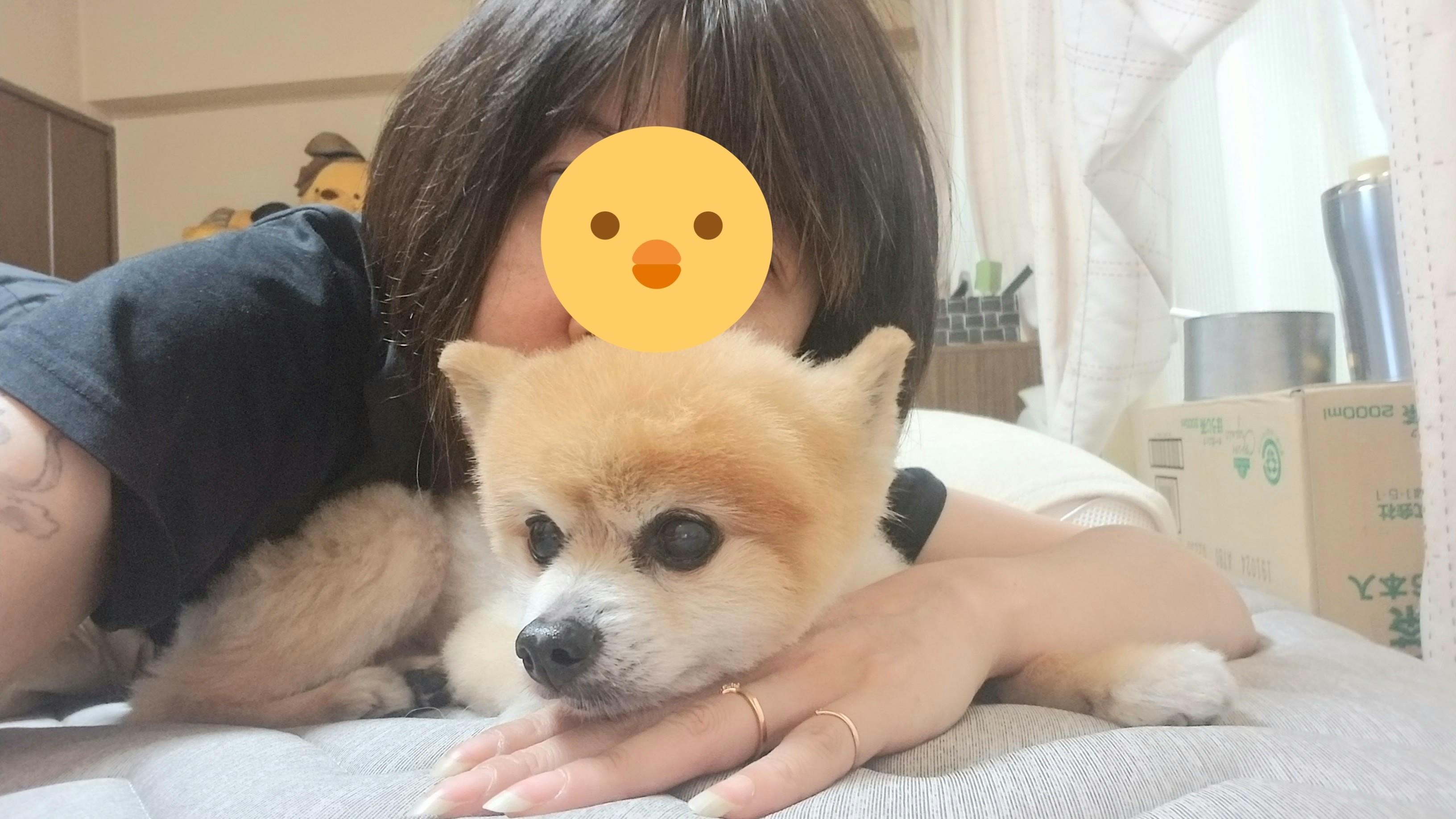 老犬愛犬ペットポメラニアンの病気回復効果的な方法元気がない危篤