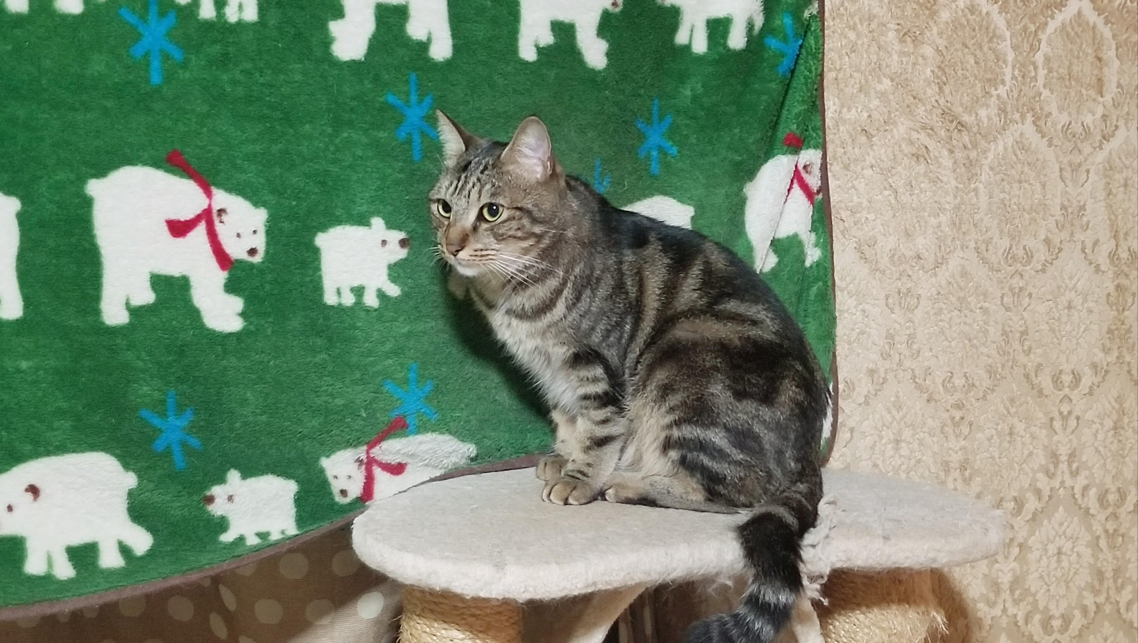 ペット猫好きにゃんこかわいいかっこいい画像凛々しい拾い保護