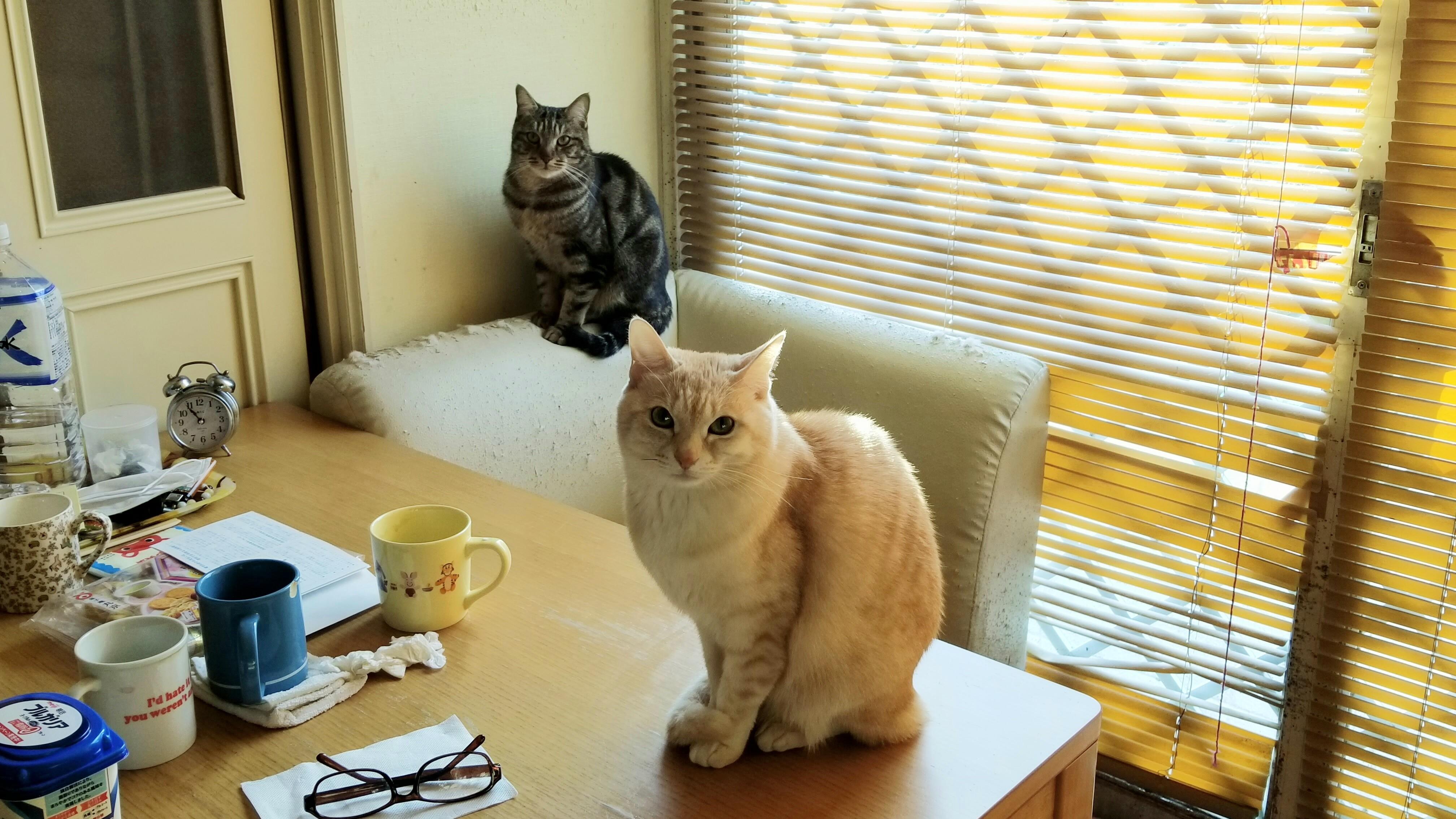 おば宅家のかわいい猫ちゃんにゃんこラブ茶色黒ネコ派好きメロメロ