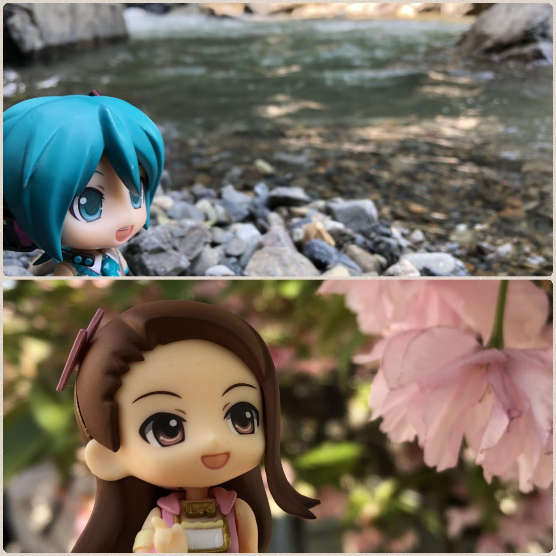 キューッポッシュ,ねんどろいど,桜の花とドール,花見,自然の綺麗な河