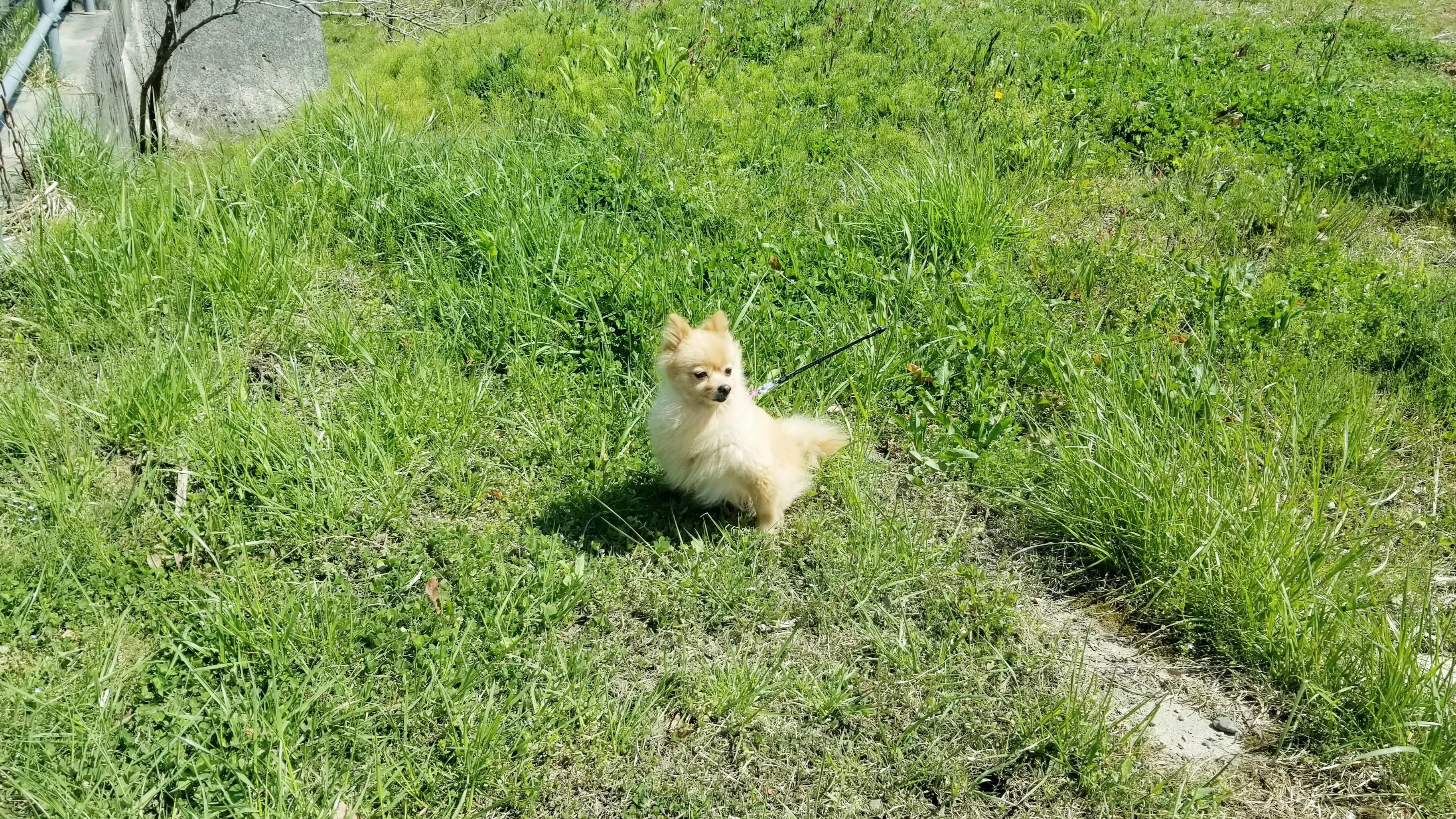 わんことお散歩山広場晴天気ぽかぽか犬ももふもふ可愛い画像