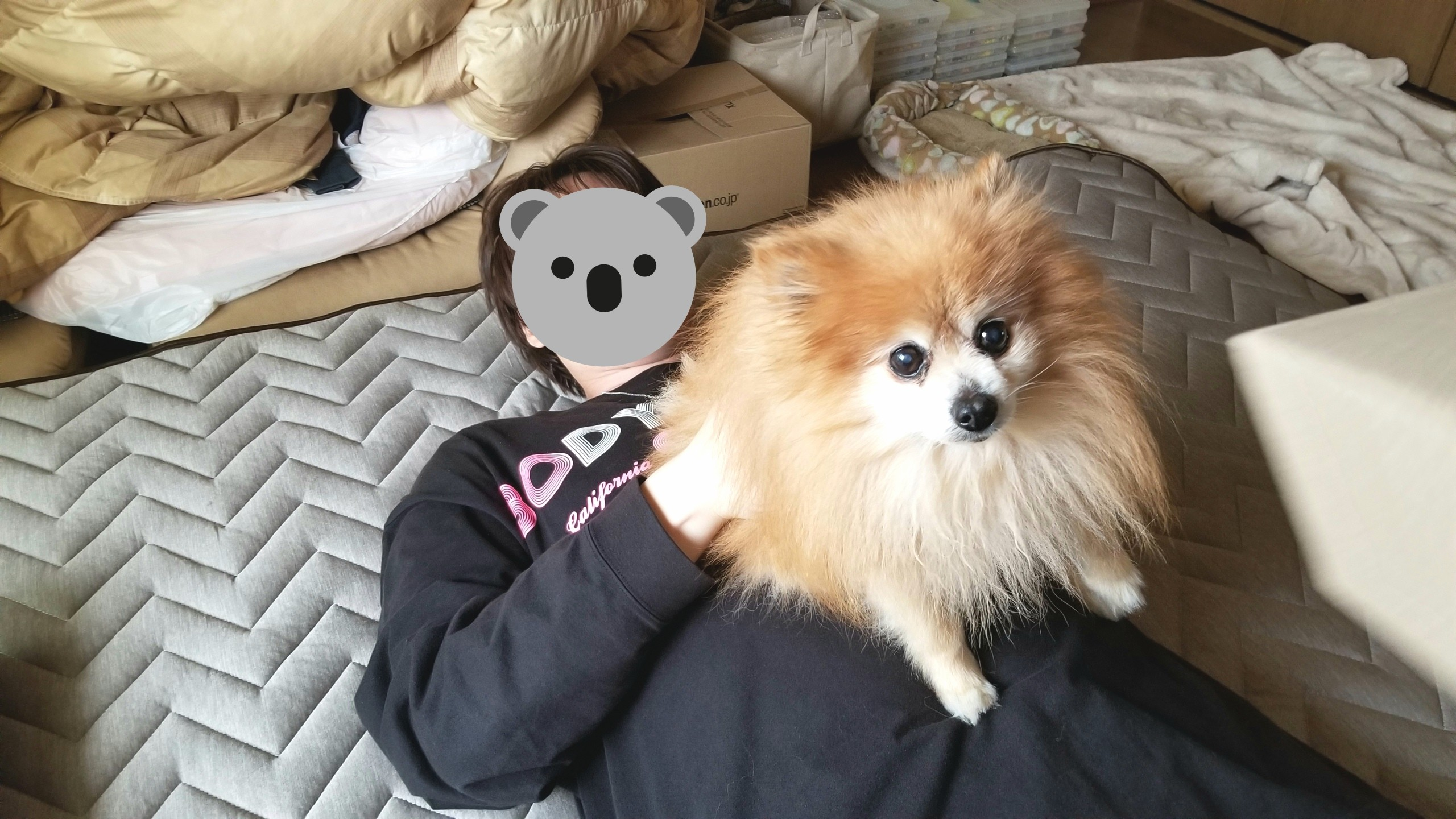 愛犬ペット世界一かわいいポメラニアン遊ぶいとこ家族病気自慢の息子