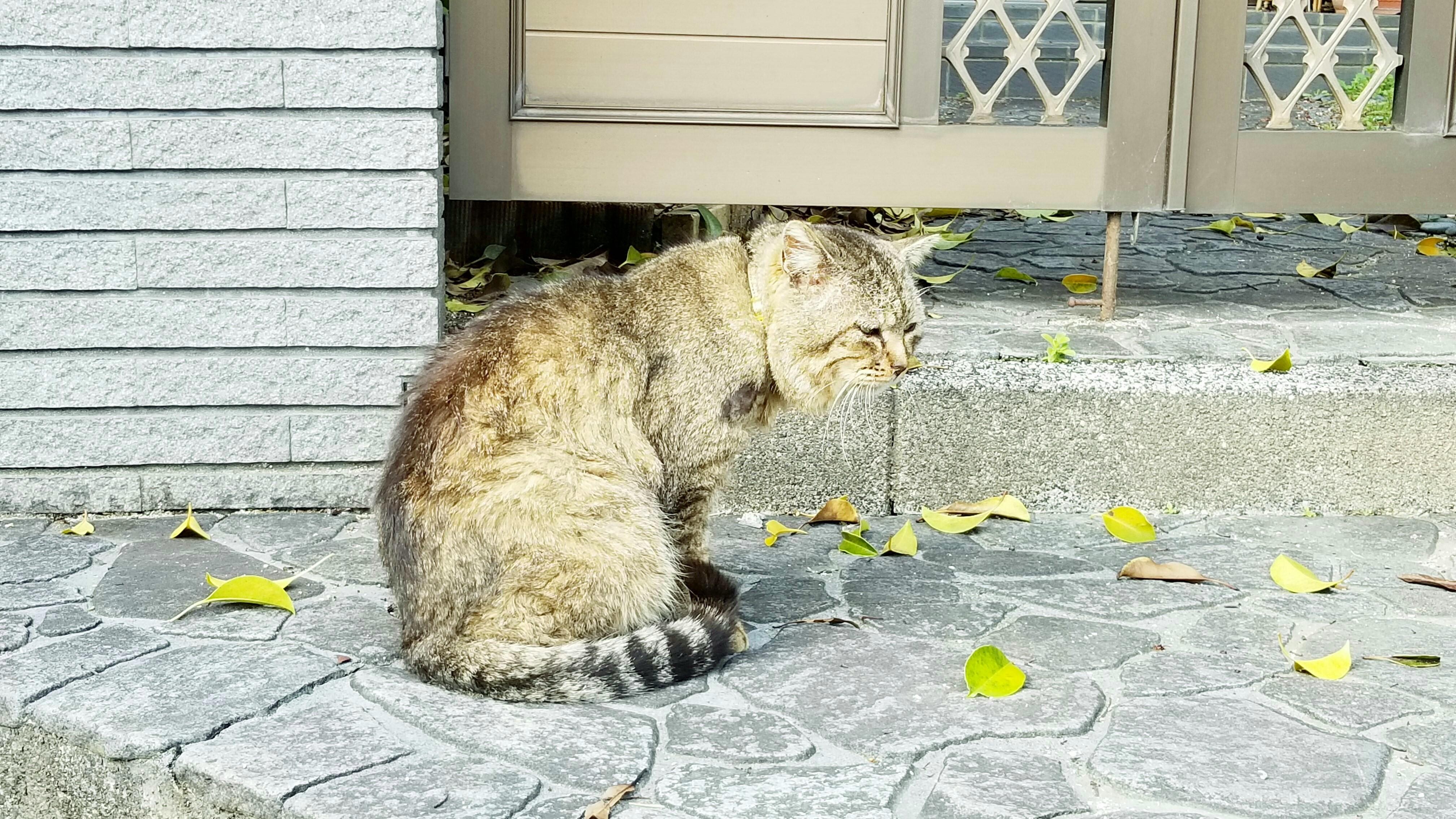 野良猫保護にゃんこパトロール日向ぼっこかわいい老おすすめブログ