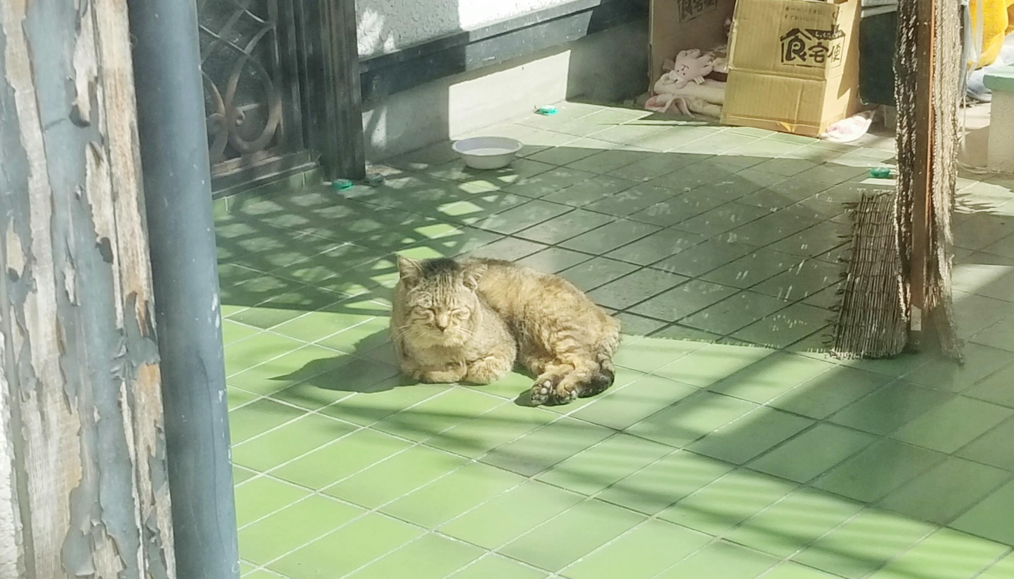 野良老猫保護活動ひなたぼっこ中かわいい画像写真まったりのんびり