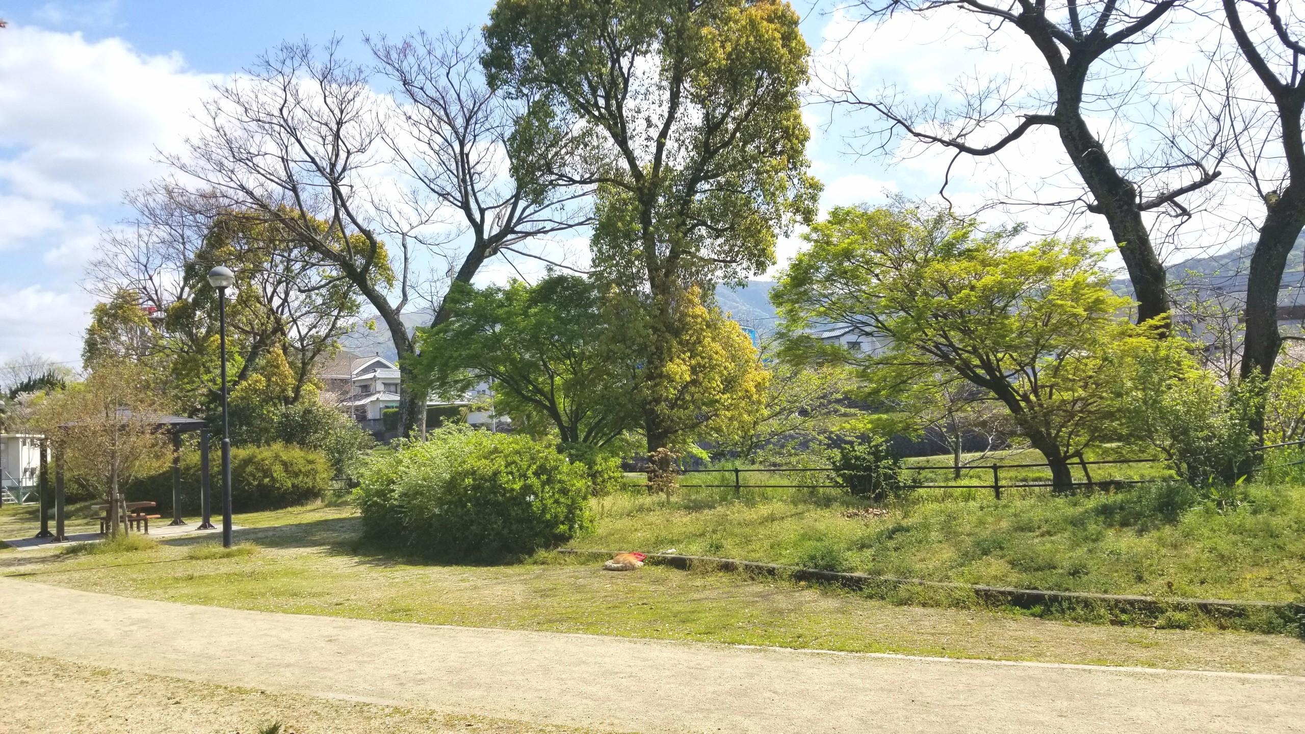 おばといとこ,公園広場散歩お出かけペット愛犬病気天気がいい日