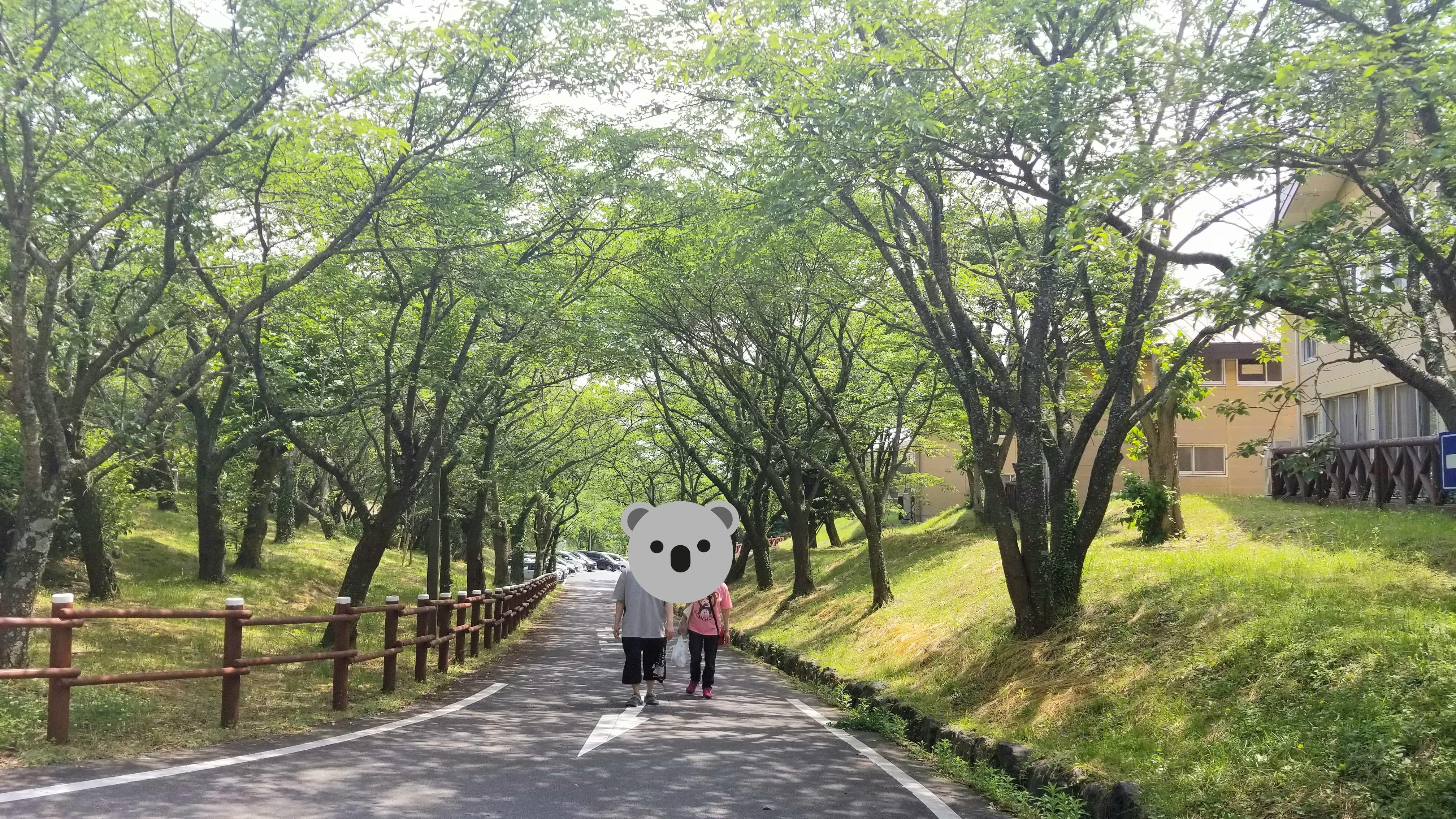山散歩ウォーキング森林緑日光浴気持ちいい綺麗な風景景色おばいとこ