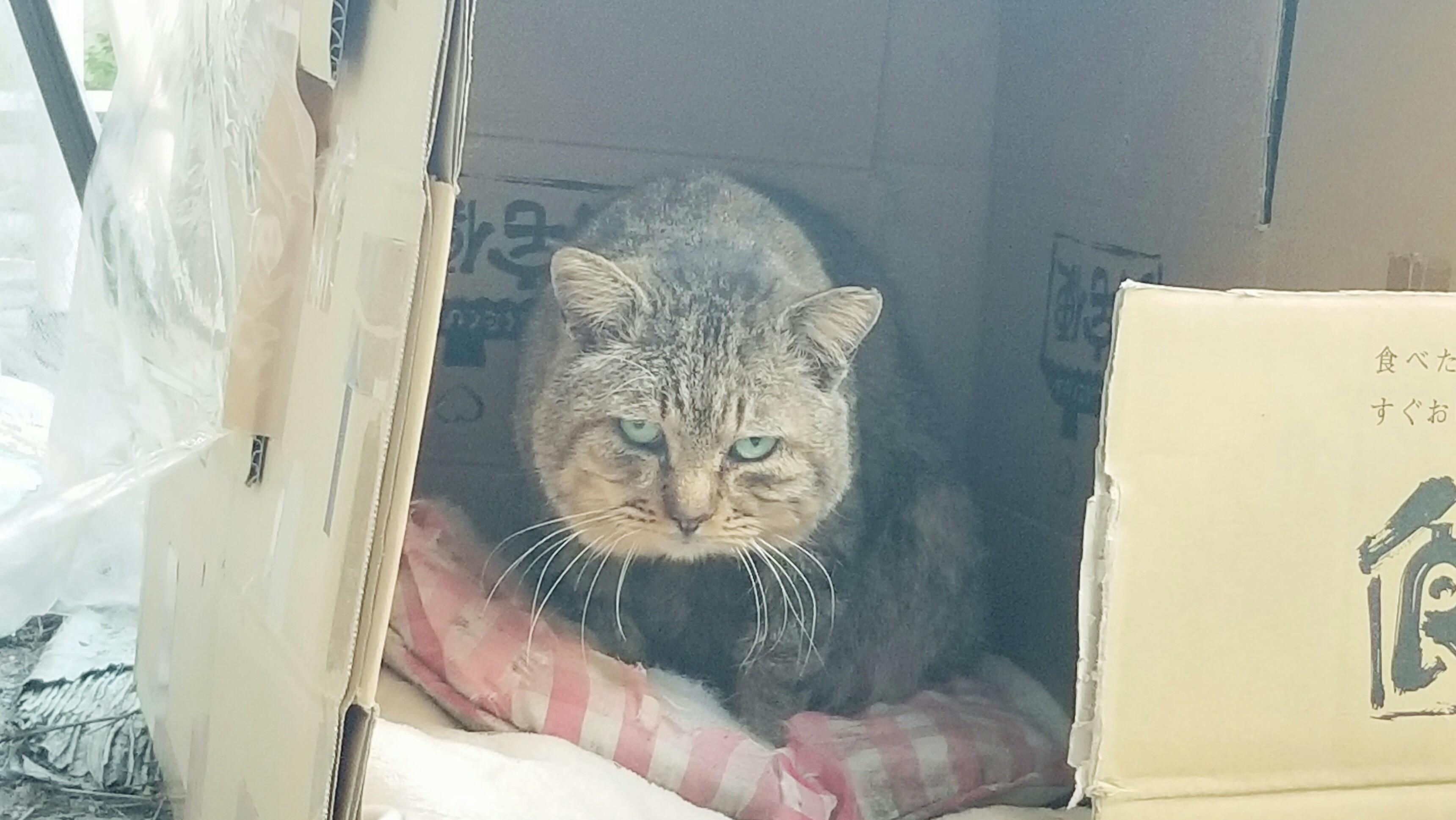 三白眼の野良猫冬餌やり保護ブログうろうろオスブサカワ飼う老衰