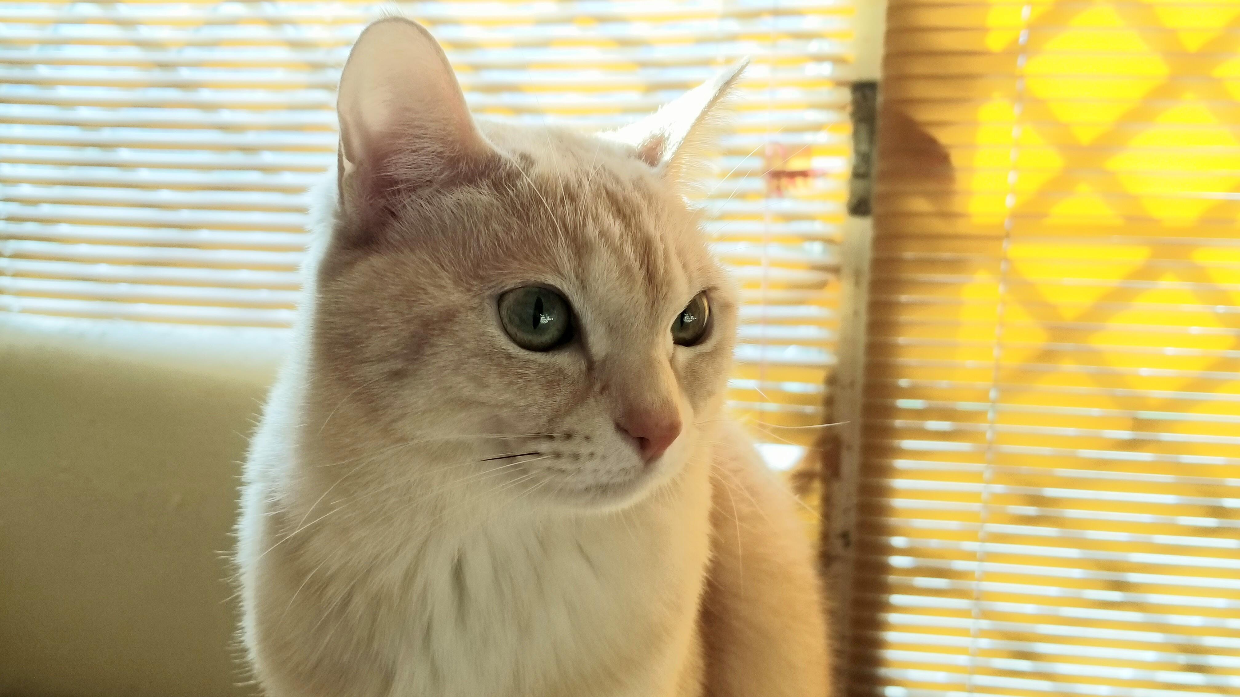 おばいとこの猫にゃんこかわいい綺麗な画像写真野良猫から家ネコへ