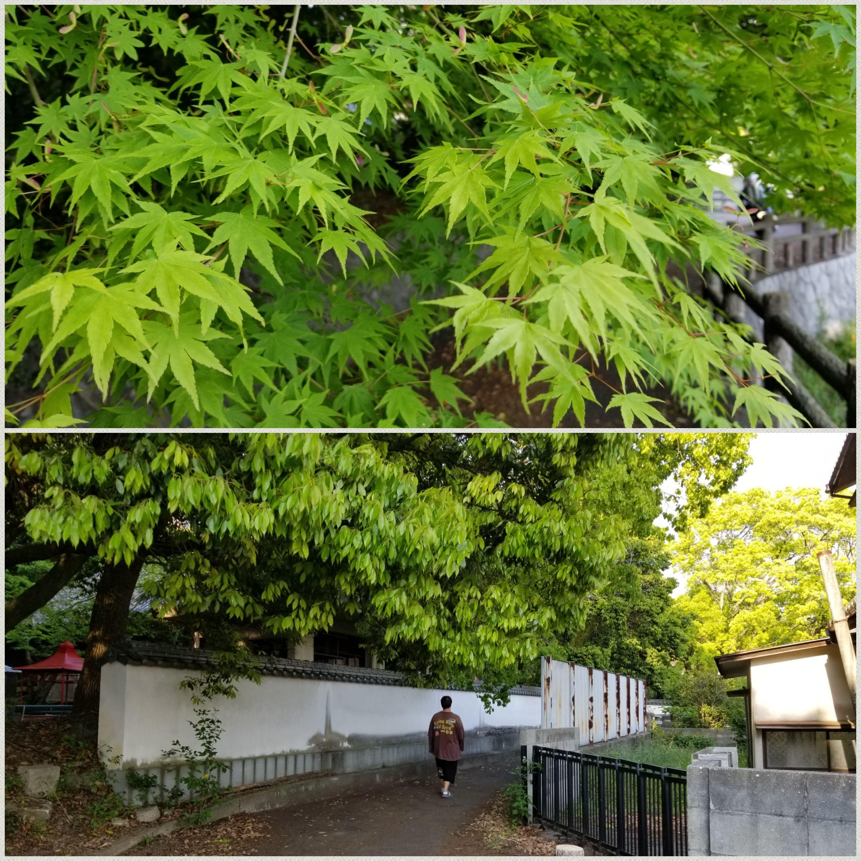 愛媛県石手寺参拝気分転換に遊歩道散策ぶらり旅おすすめスポット