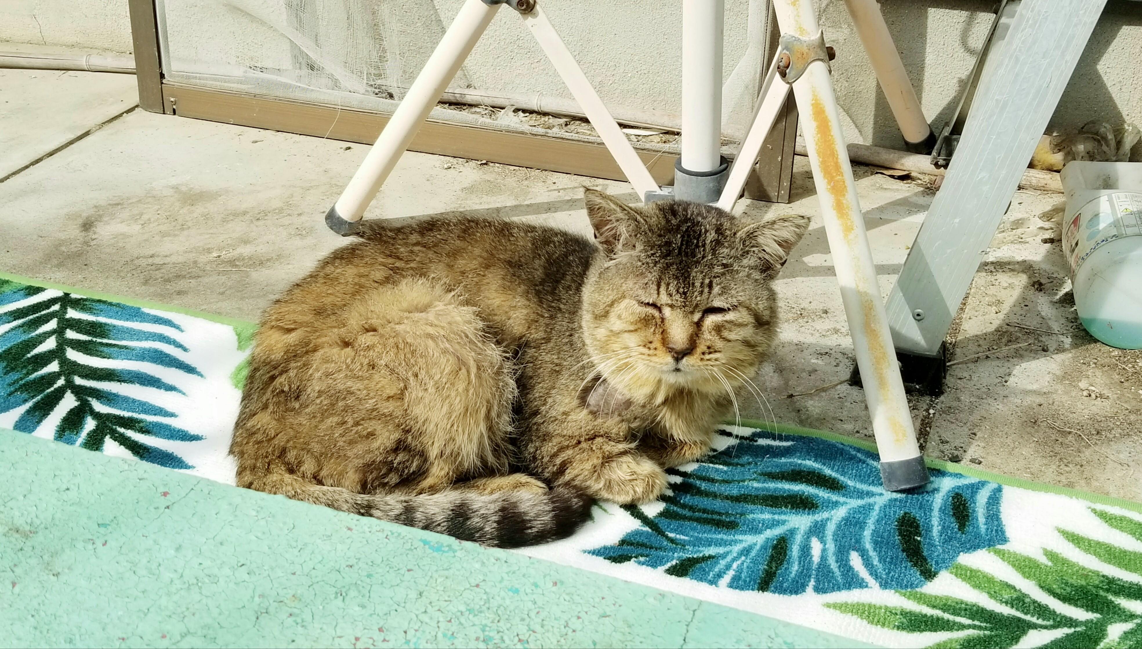 野良猫がなつくまで日常生活観察ブログにゃんラブかわいい画像写真