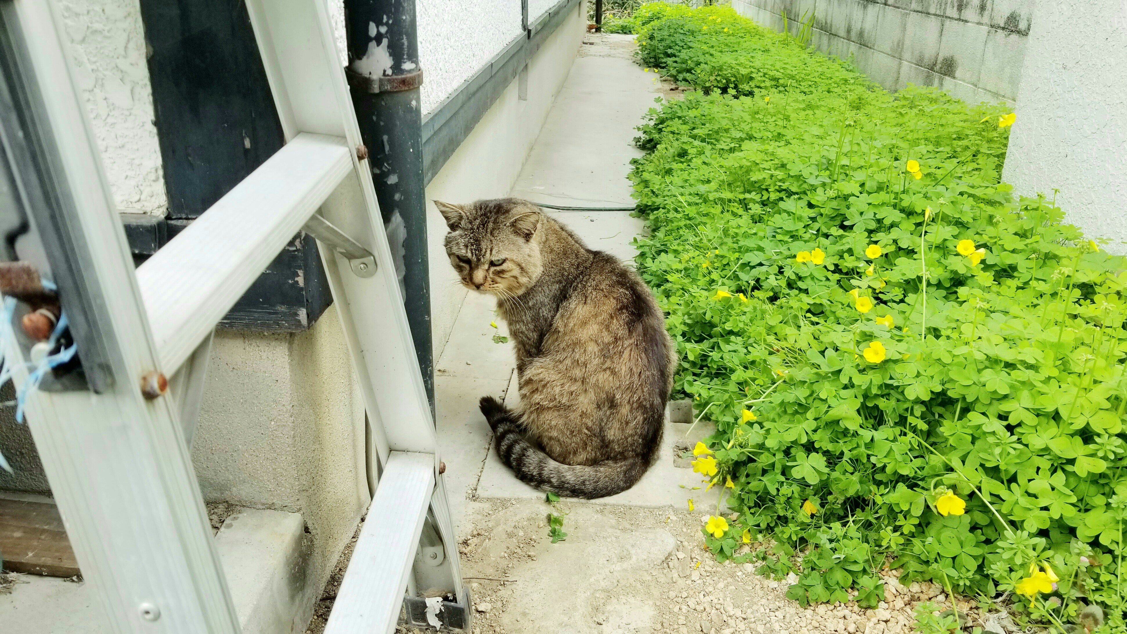 野良猫保護にゃんこちゃんパトロール縄張り探検に行く日常生活