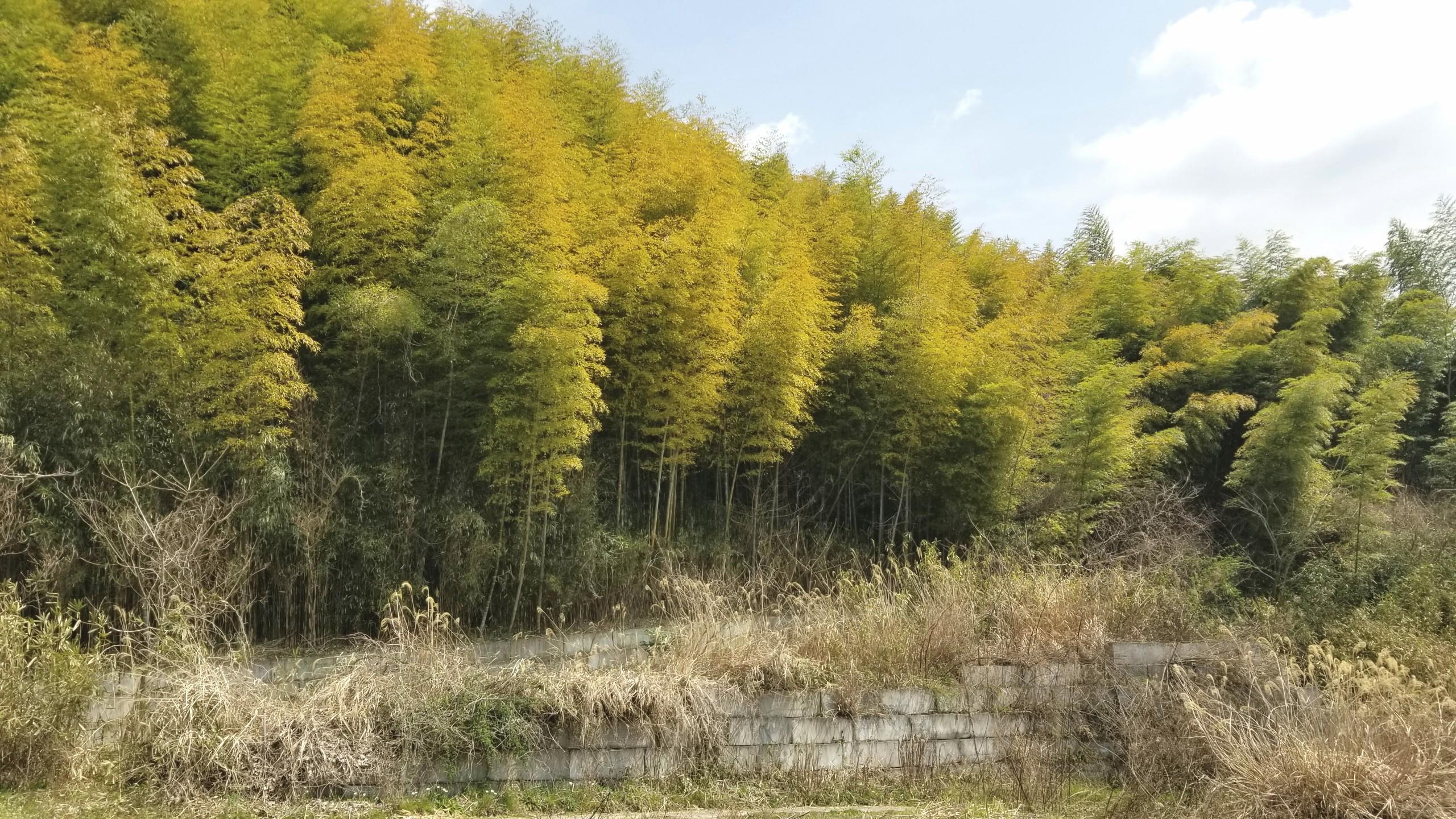 つくし採りに行った,愛媛県の山,癒される大自然の空気は気分爽快