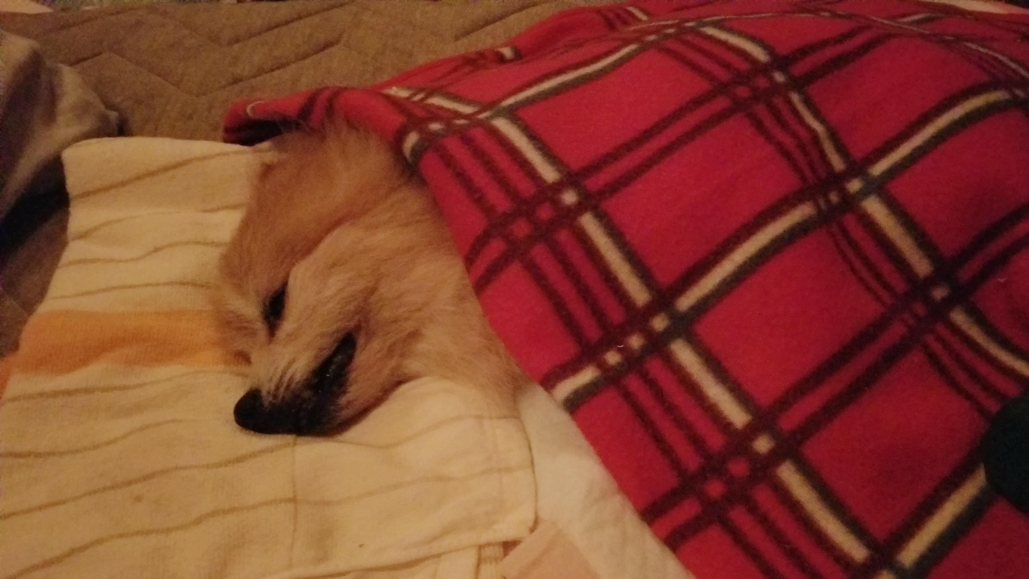 愛犬ペットとの命日病気老犬15才お通夜最期の夜お別れ悲しい突然死