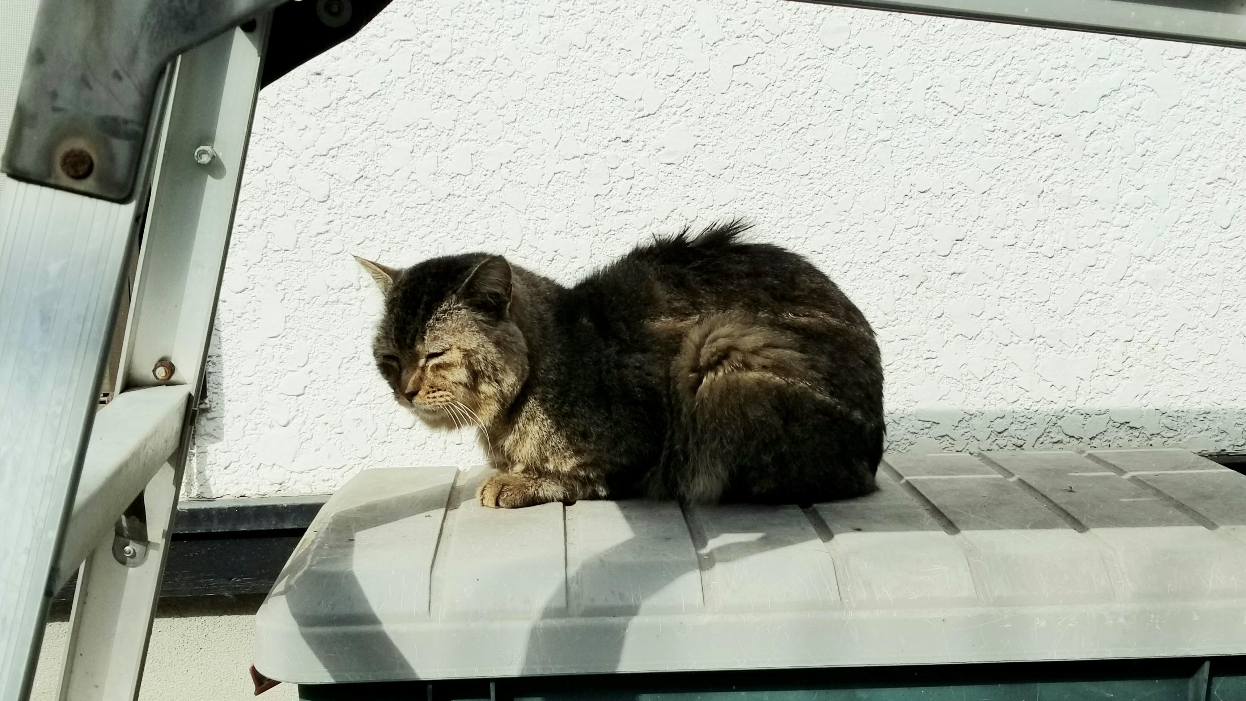 野良猫老衰日向ぼっこ日光浴かわいいにゃんこ寝床拾う迎え方ブログ
