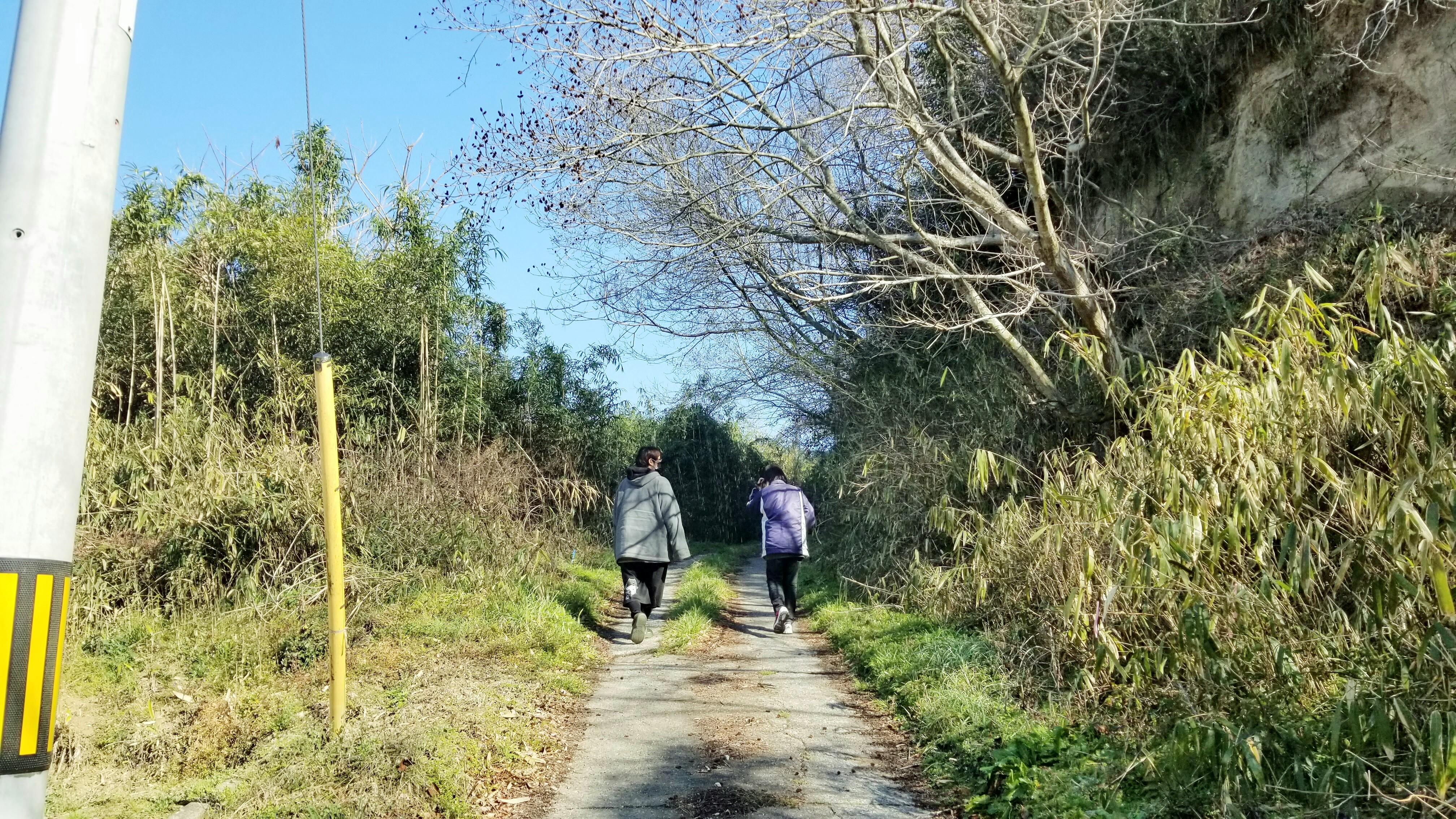 つくし山菜採り山登り遊び楽しい事1日のんびり時間季節松山市