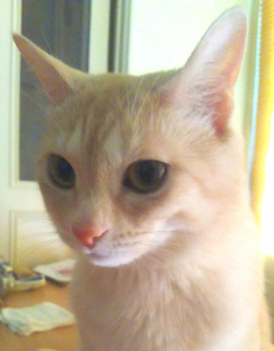 野良猫成長,かわいいネコ,ペットは家族,初めての体験,綺麗毛並み