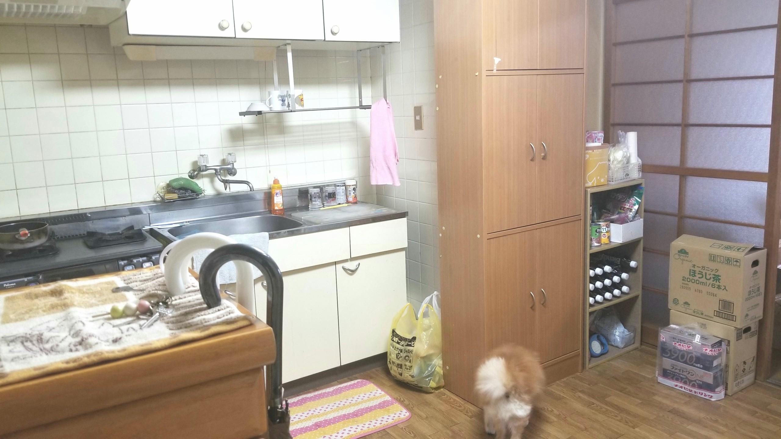 40代熟女の一人暮らしキッチン,ペット犬,台所食器棚,ワンルーム