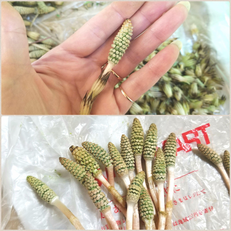 つくしの時期シーズン,大量はかま剥き部位,下処理の仕方,山菜花粉,